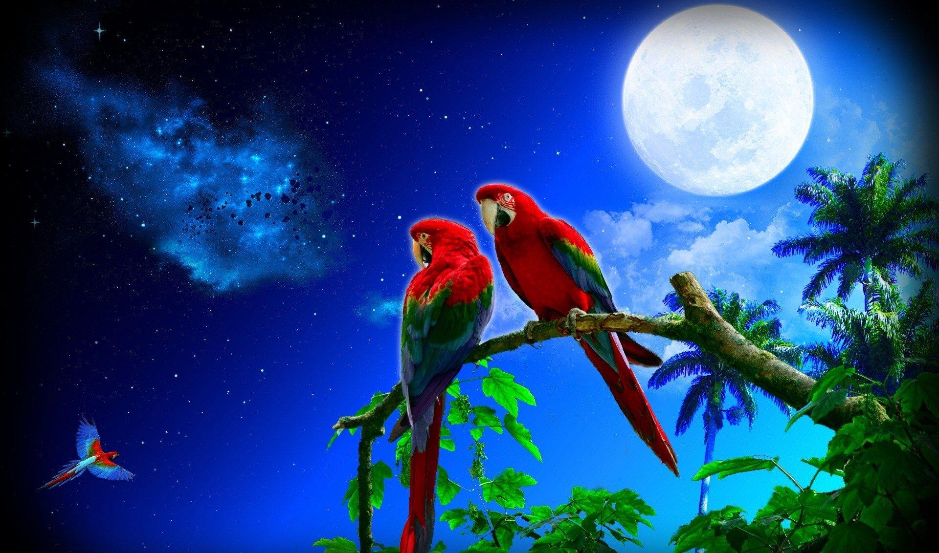 cute parrot images