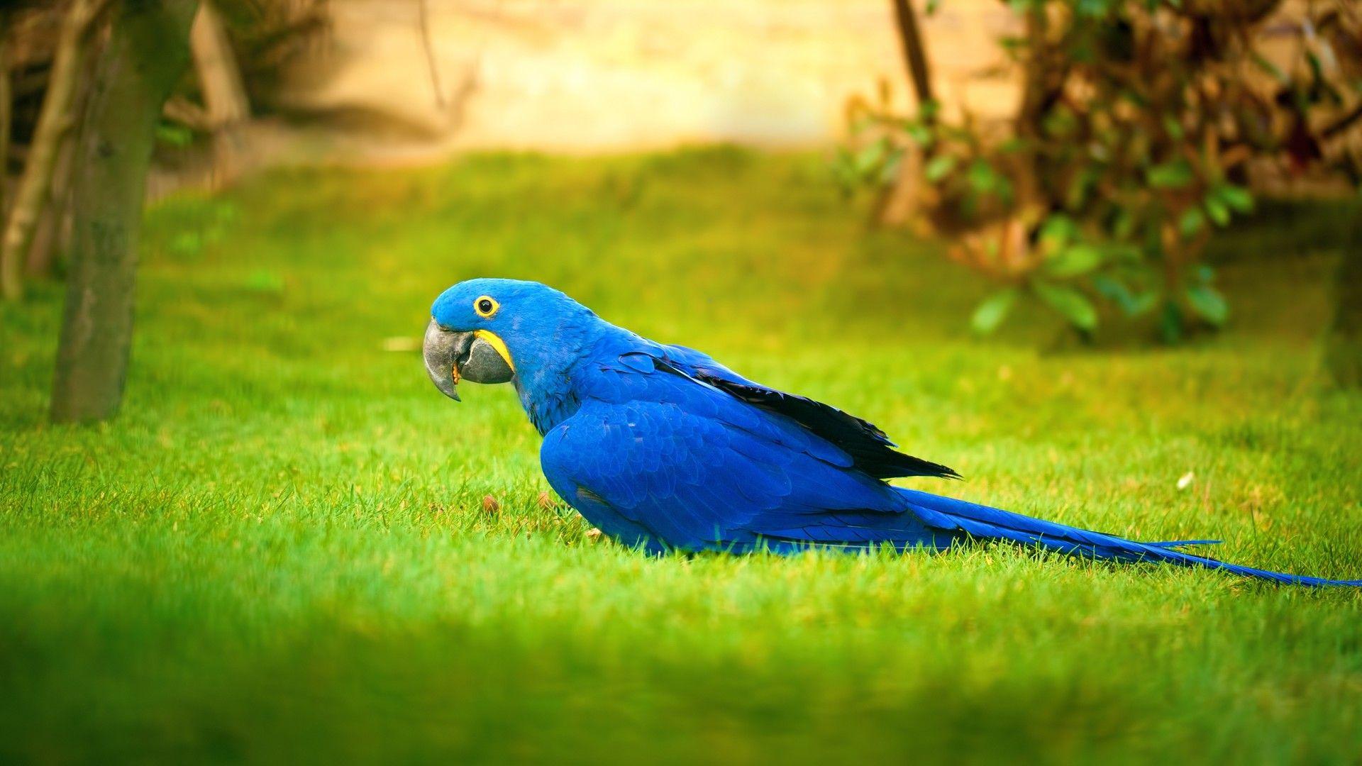 birds parrot image