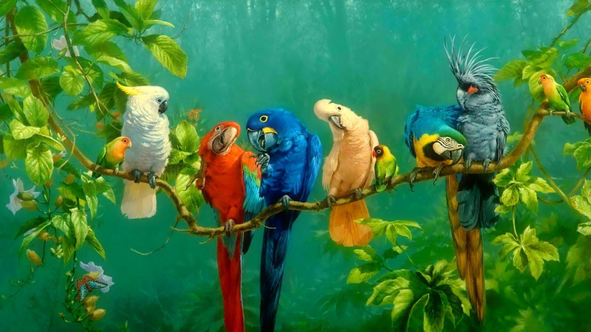 parrot birds images 4k