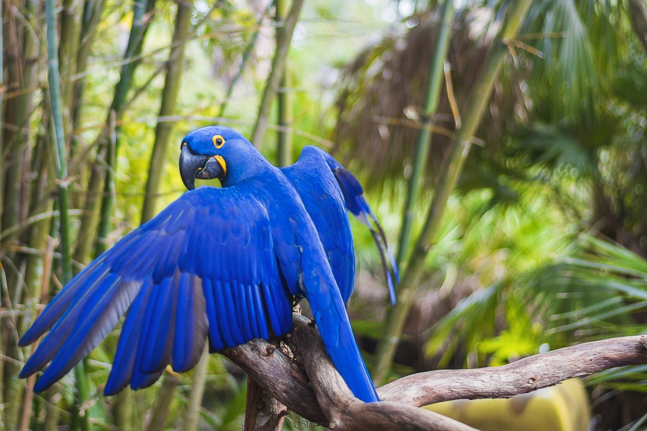 hd photos of parrots