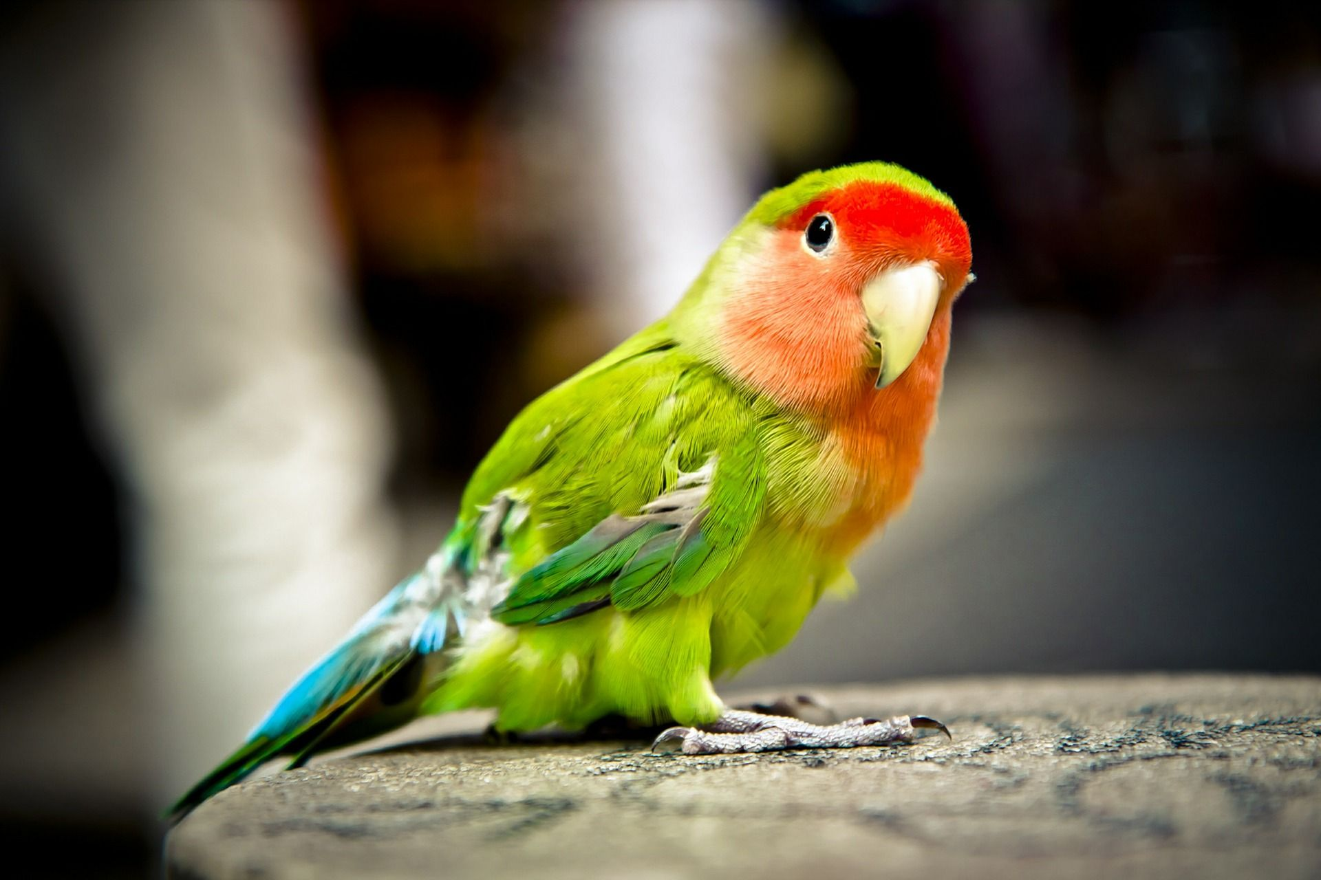 images of parrot
