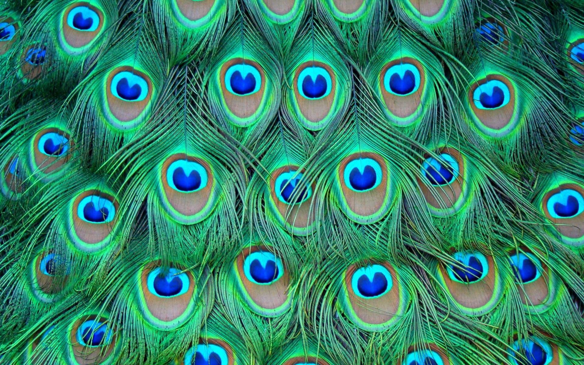 peacock backgrounds wallpapers
