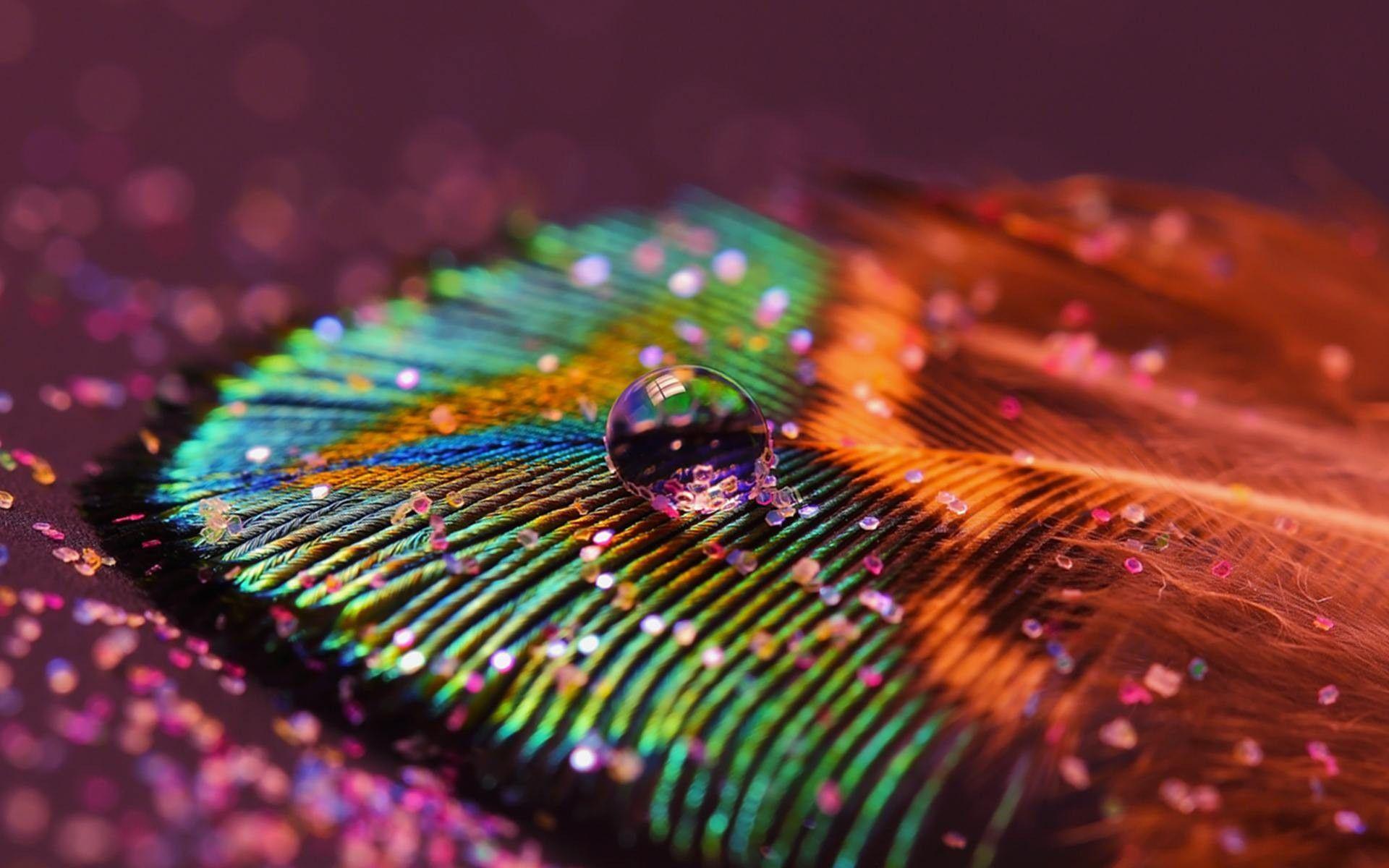 peacock photography