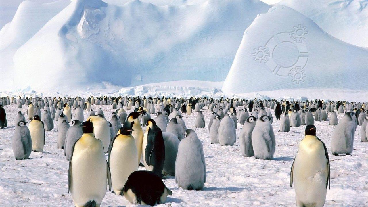 penguin backround