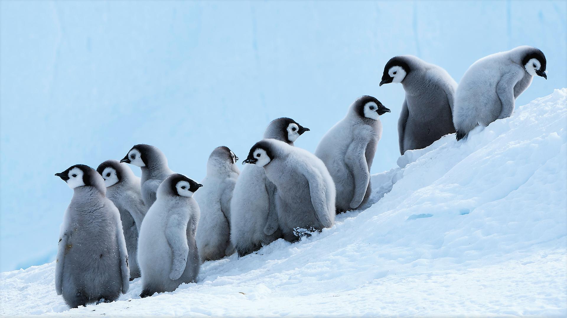 pics of penguin