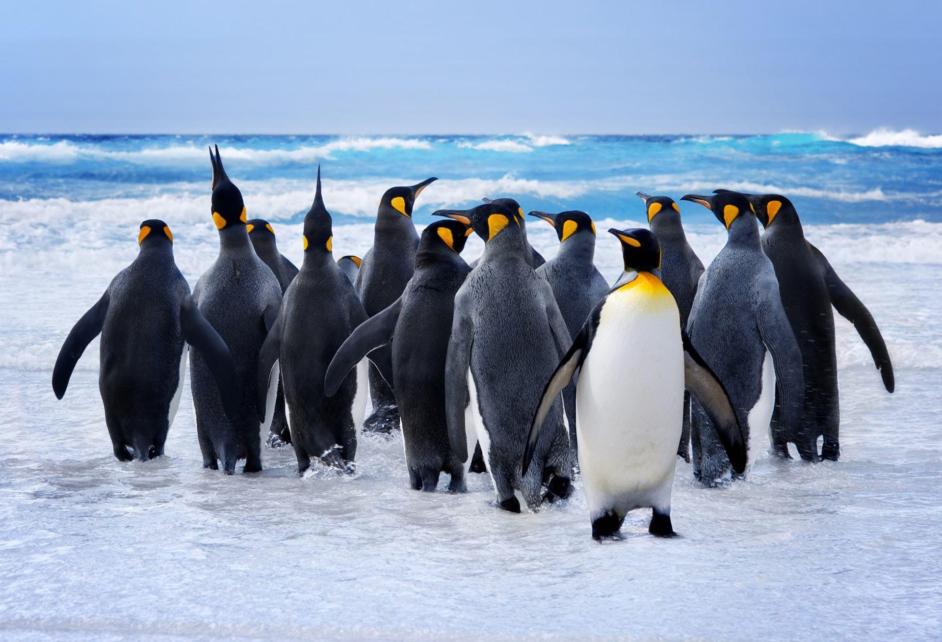 penguins backgrounds