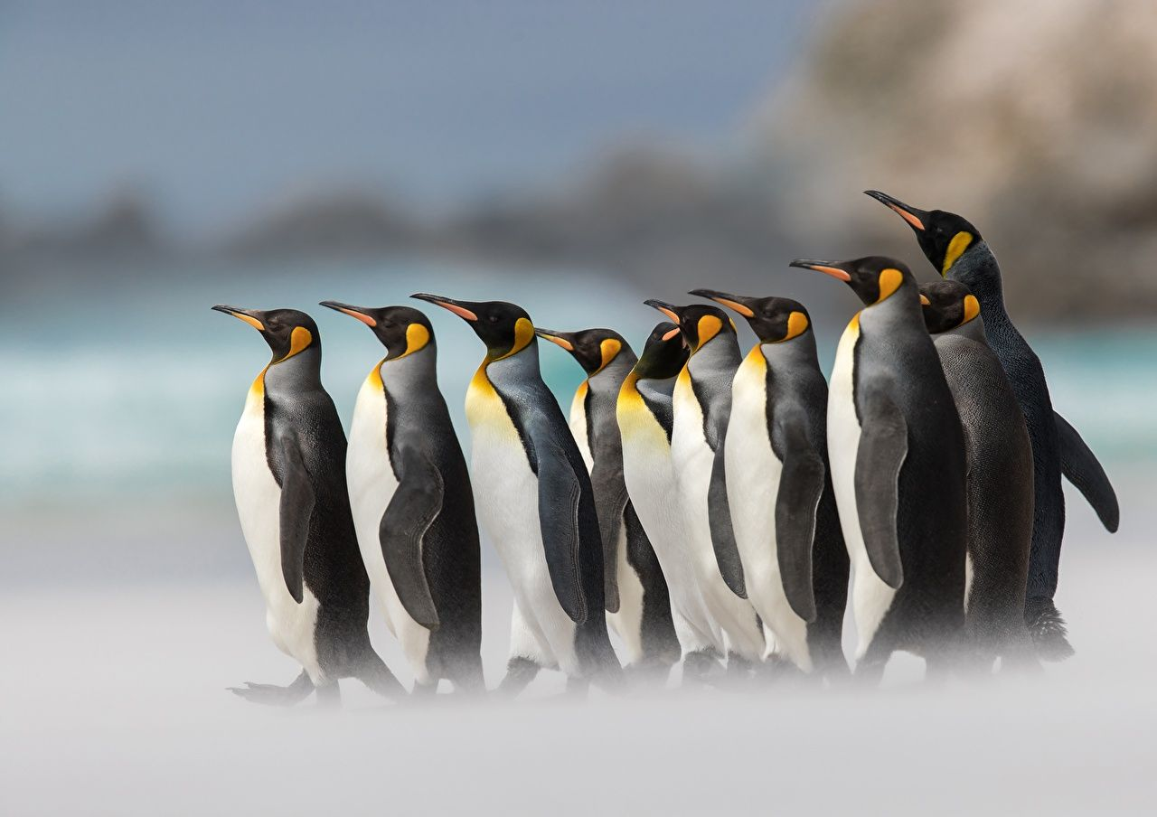 photos of penguins