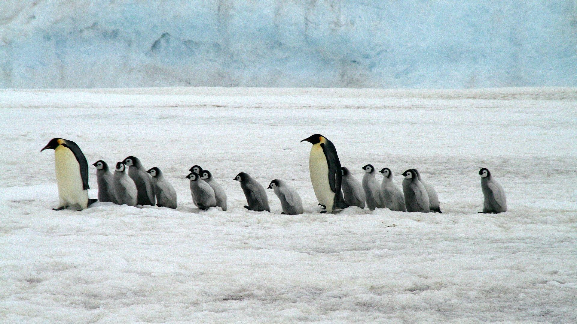 image penguins