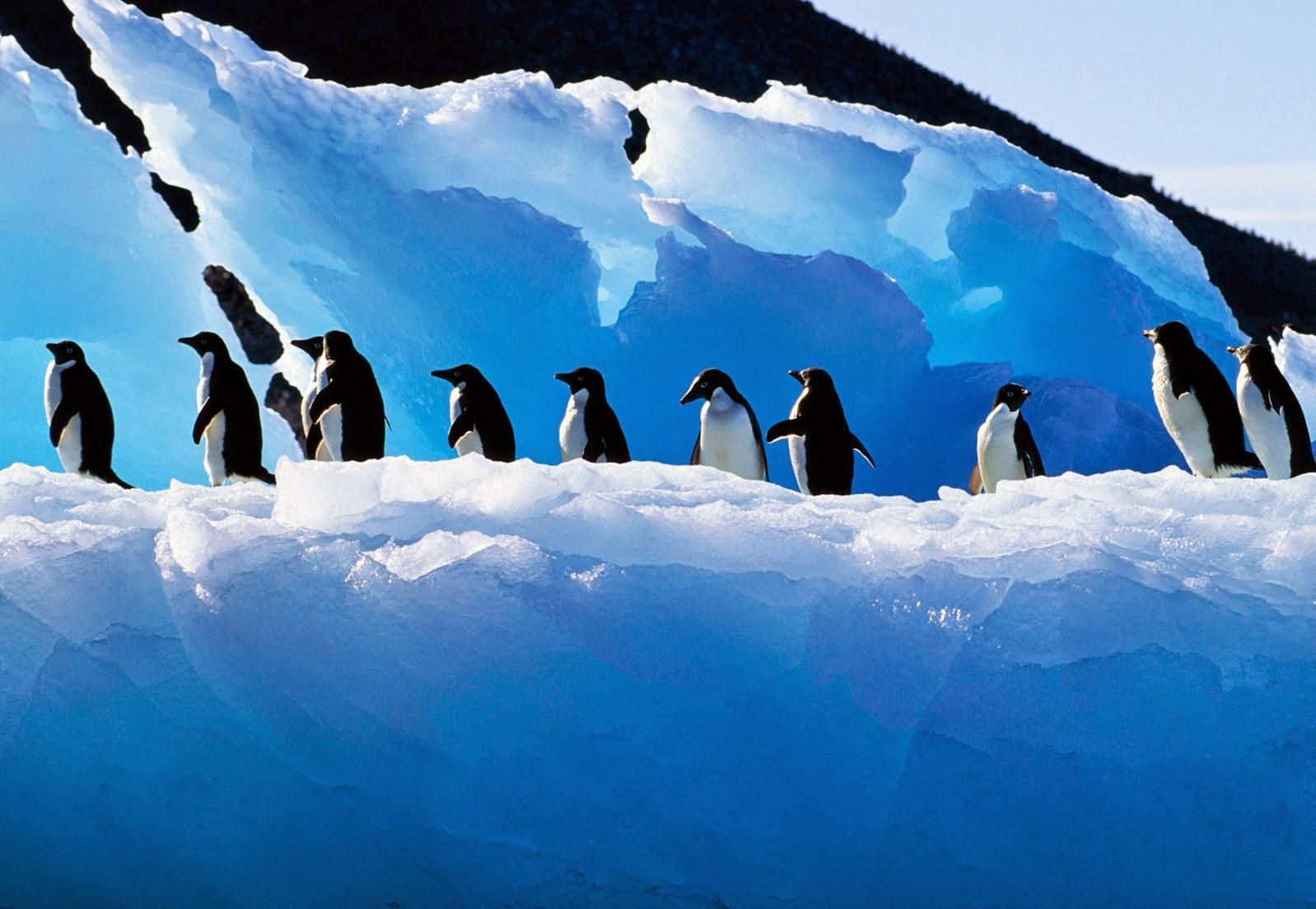 penguin profile picture