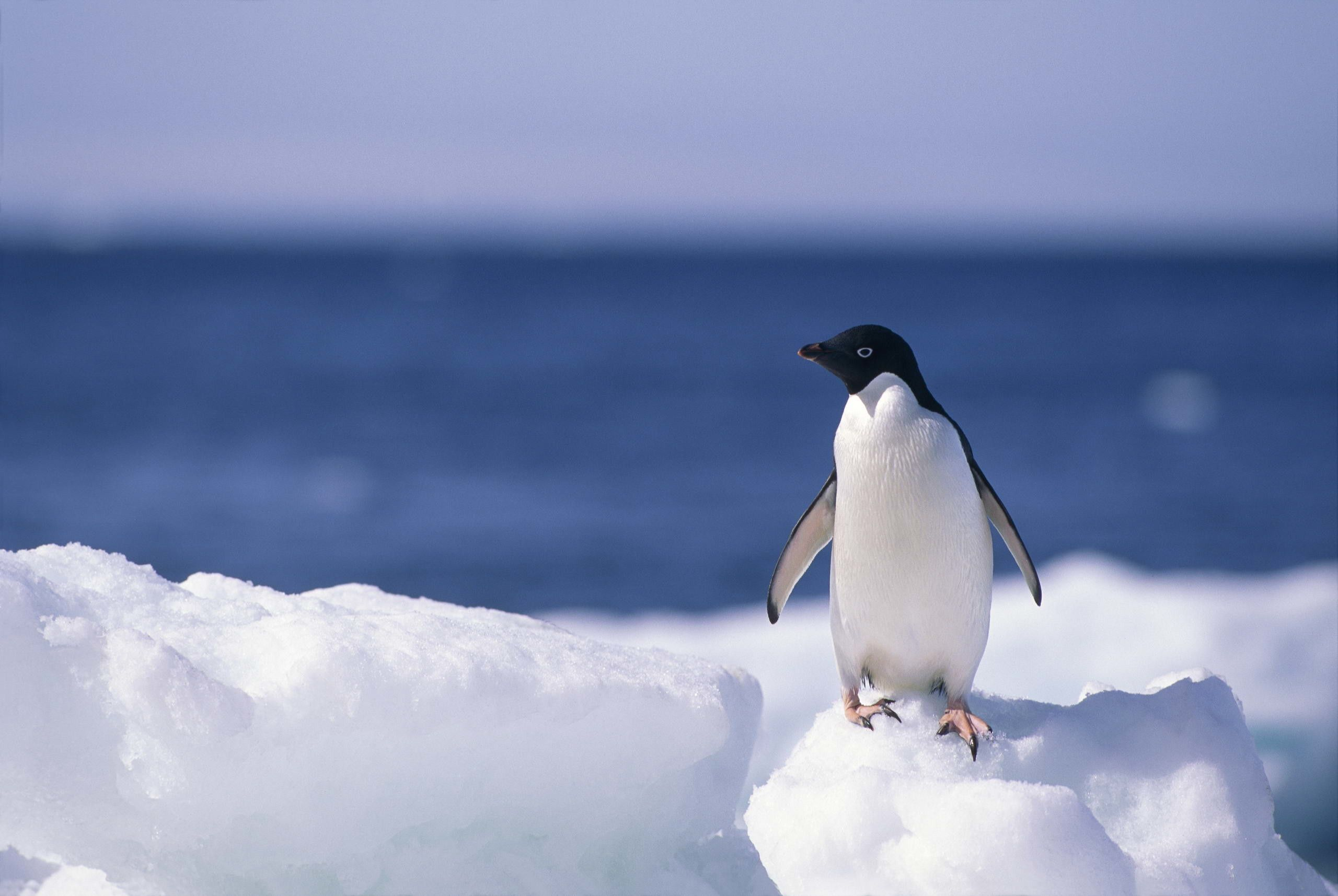a picture of a penguin