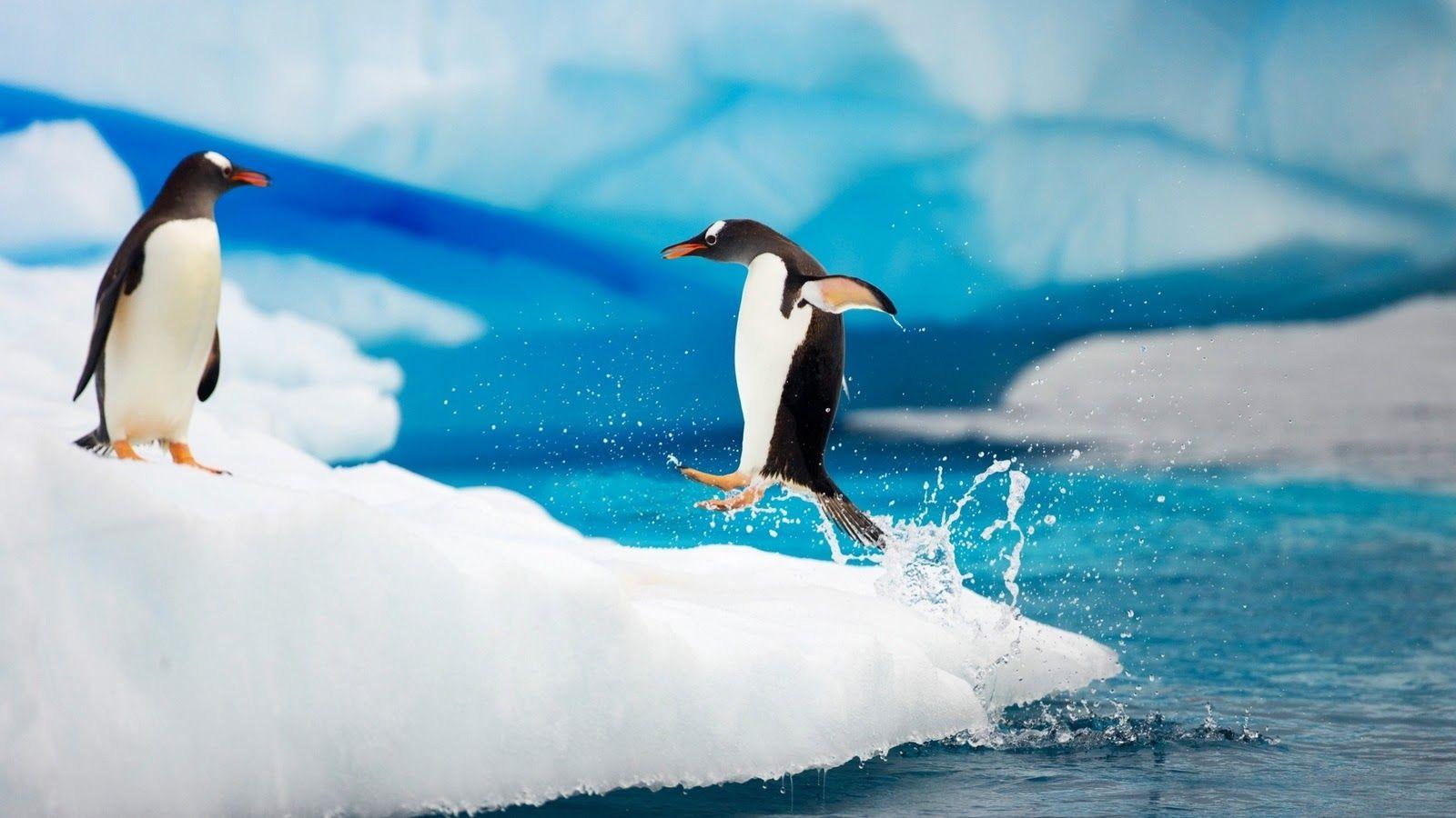 penguin wallpaper iphone