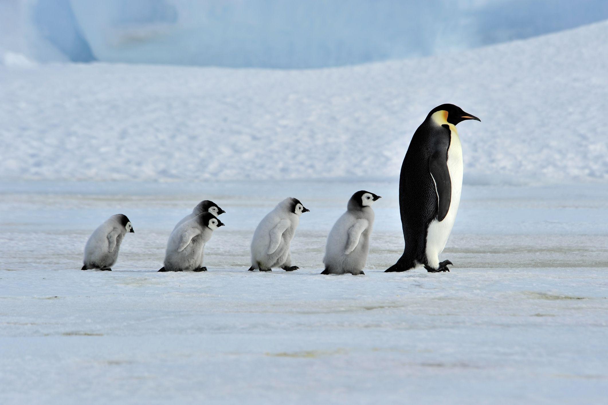 penguin screensavers