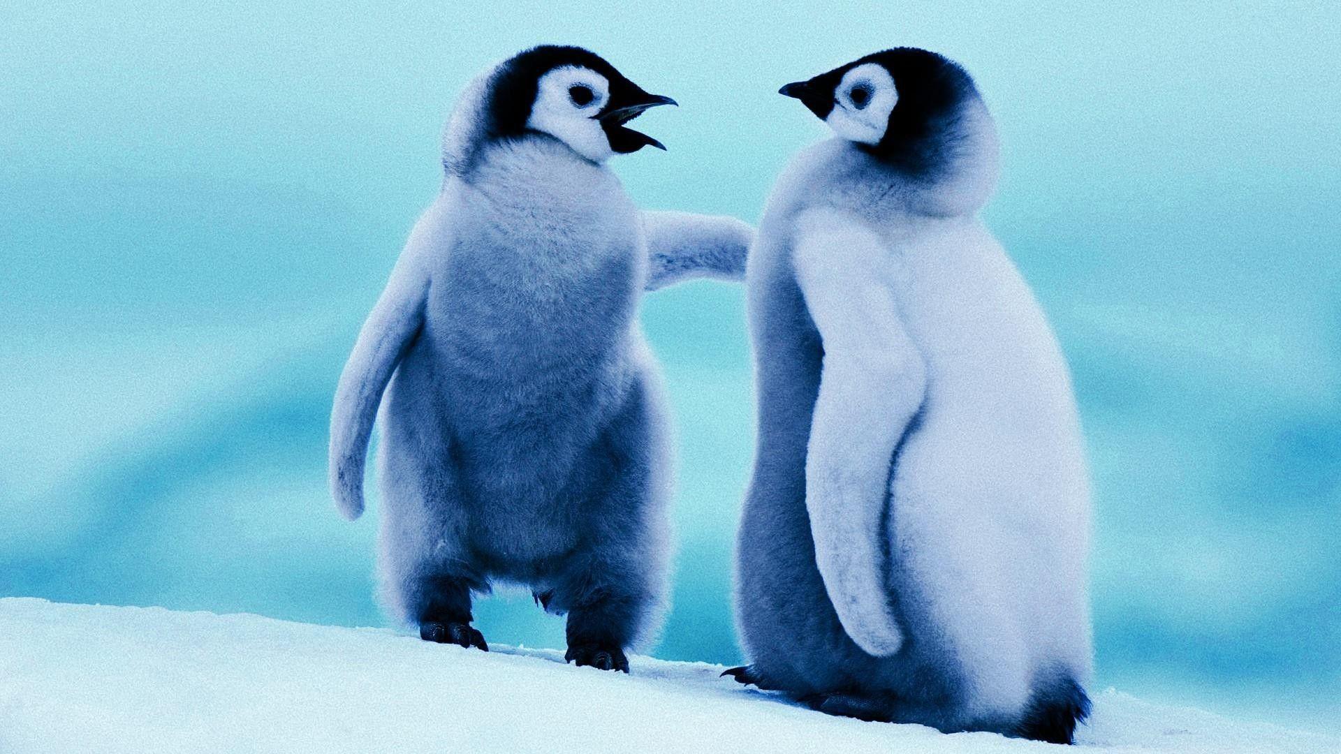 penguin images free download