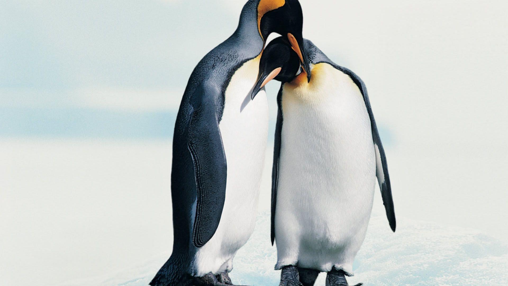 penguin jpg