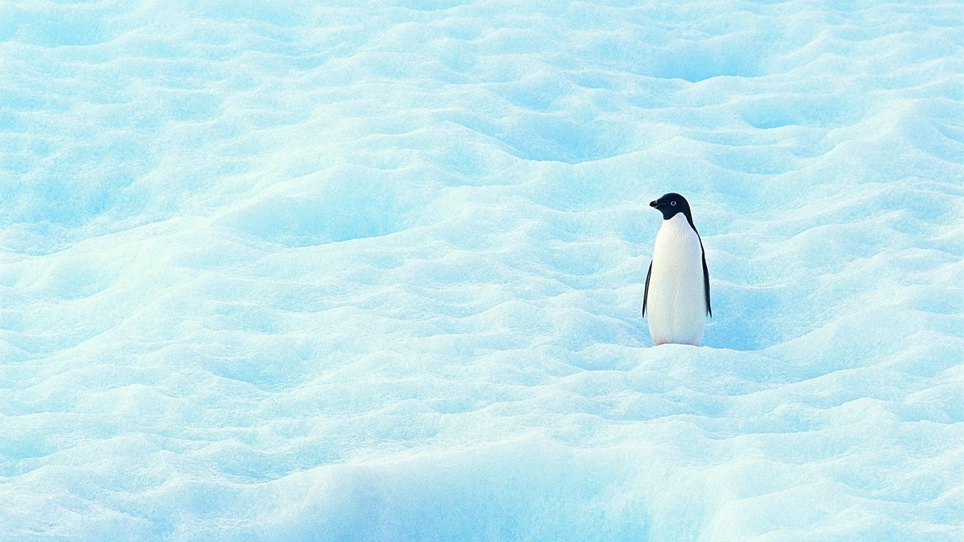 penguin screen savers