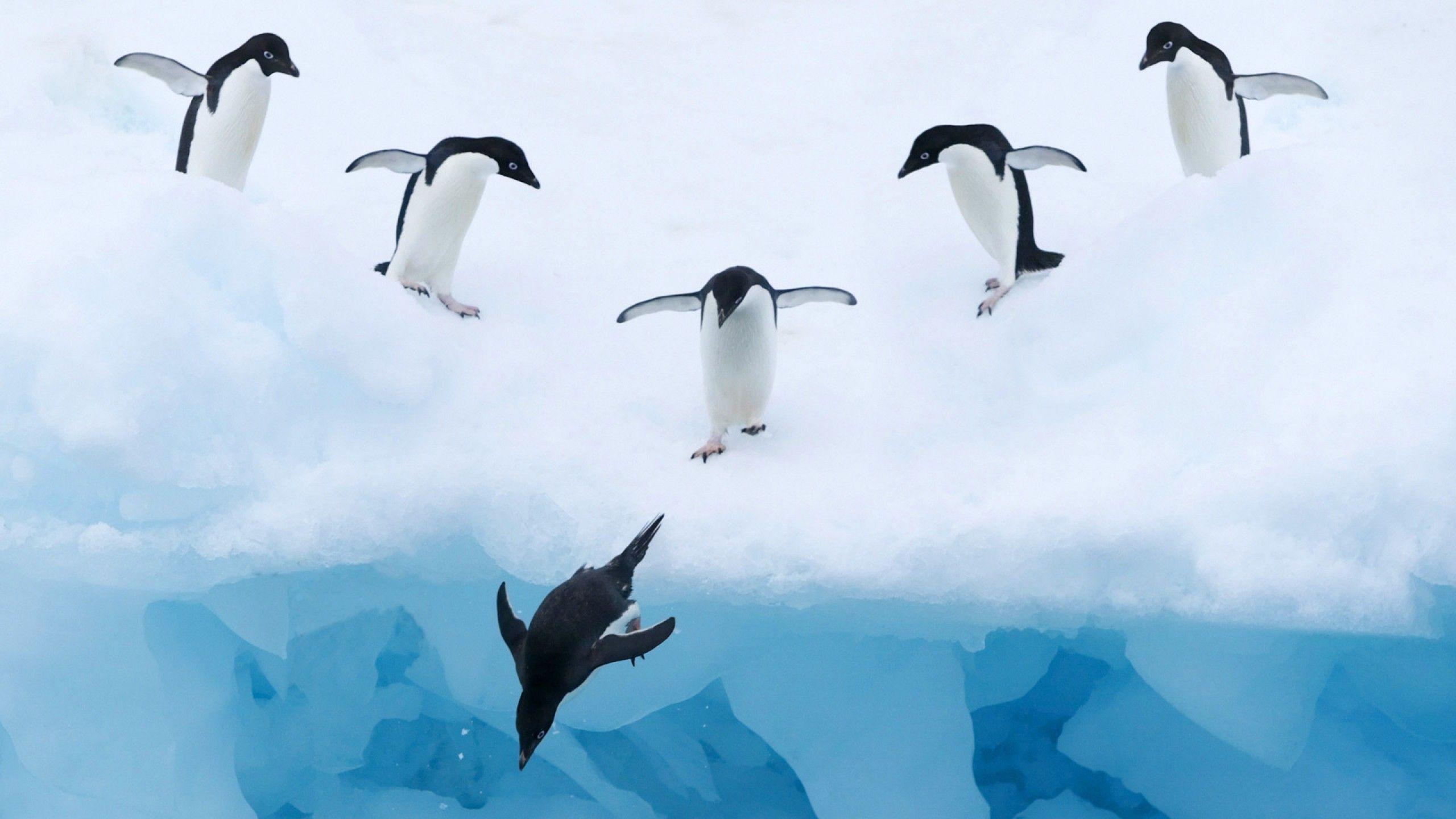 penguin photos free