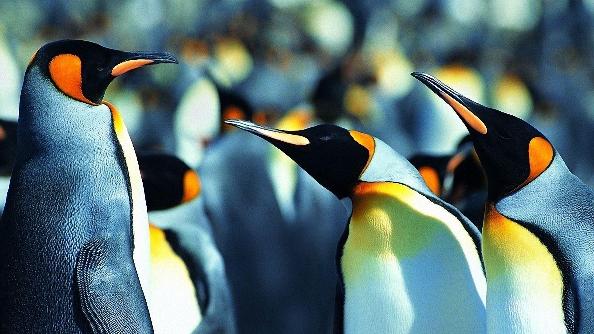 cool penguin background