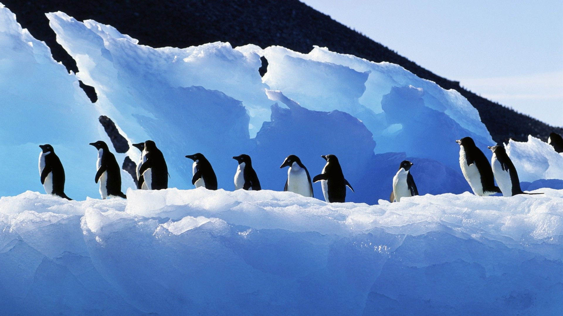penguin background pictures