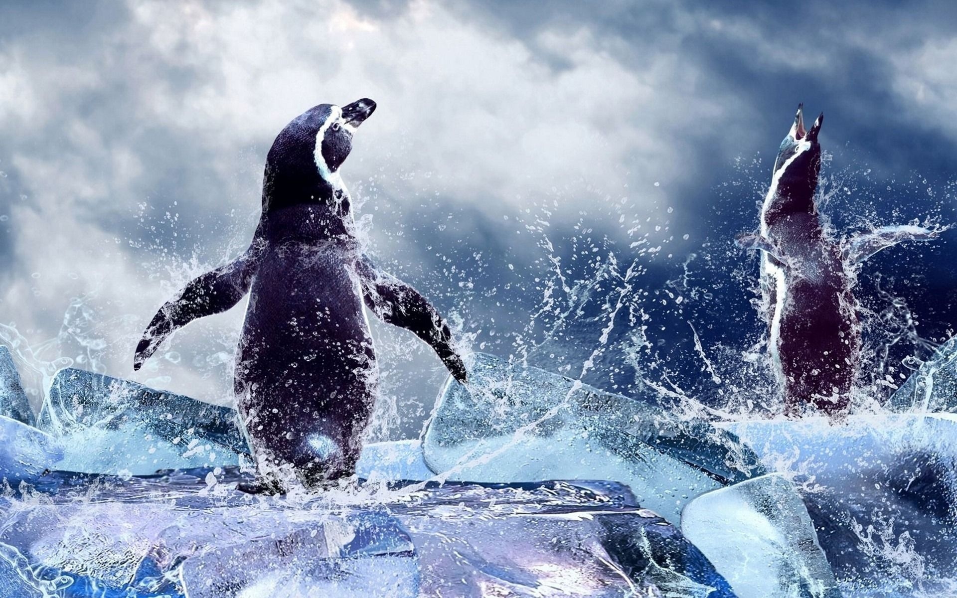 pictures of real penguins