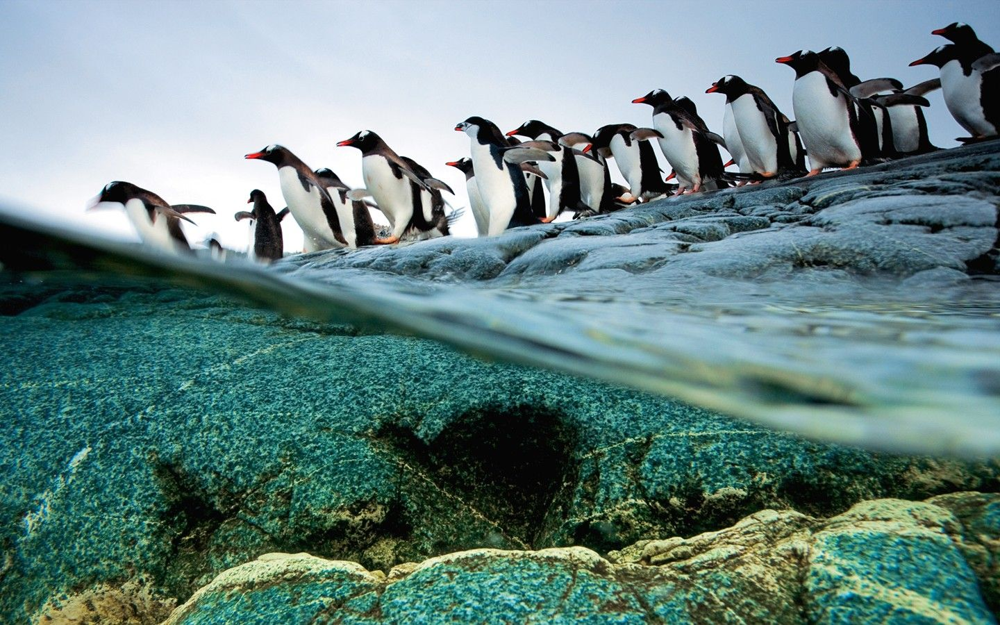 images of cute penguins