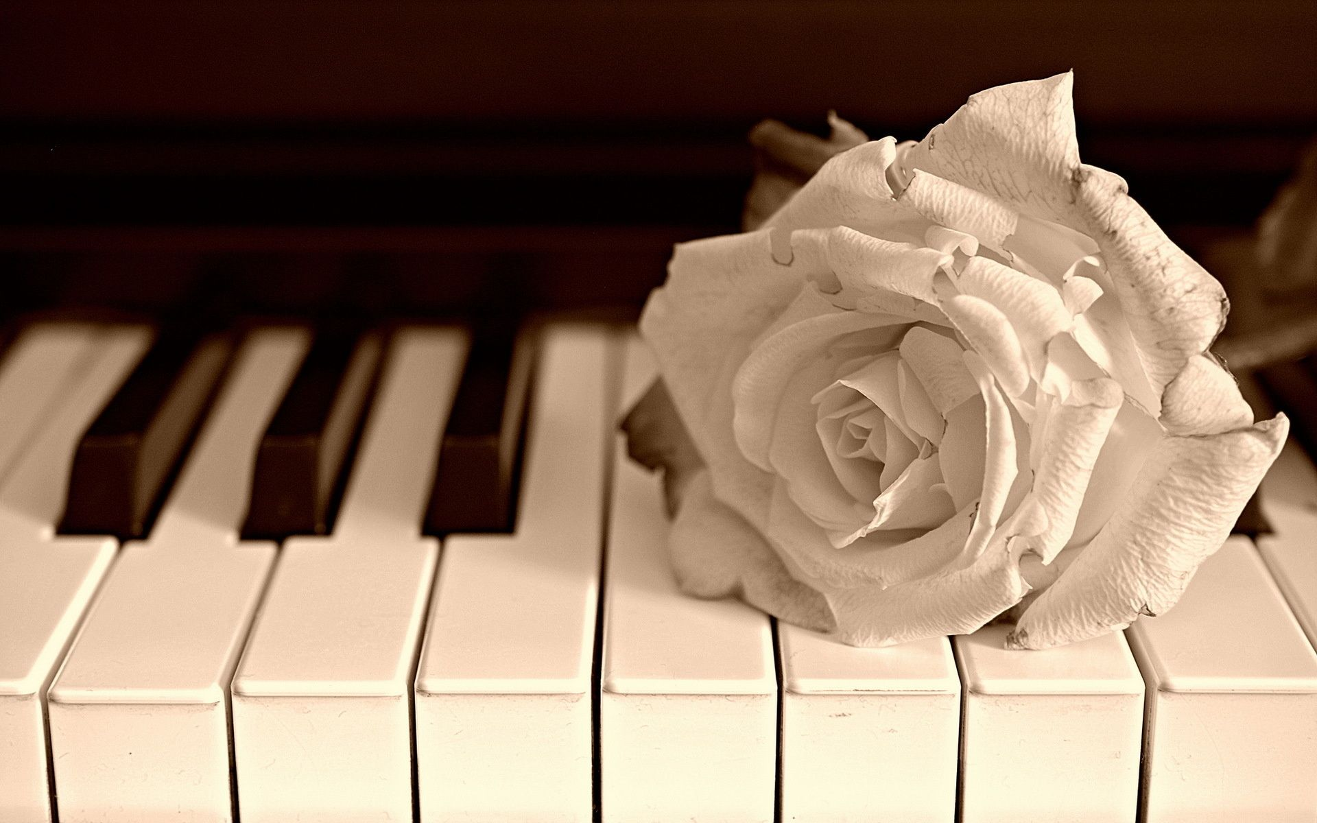 piano pictures free