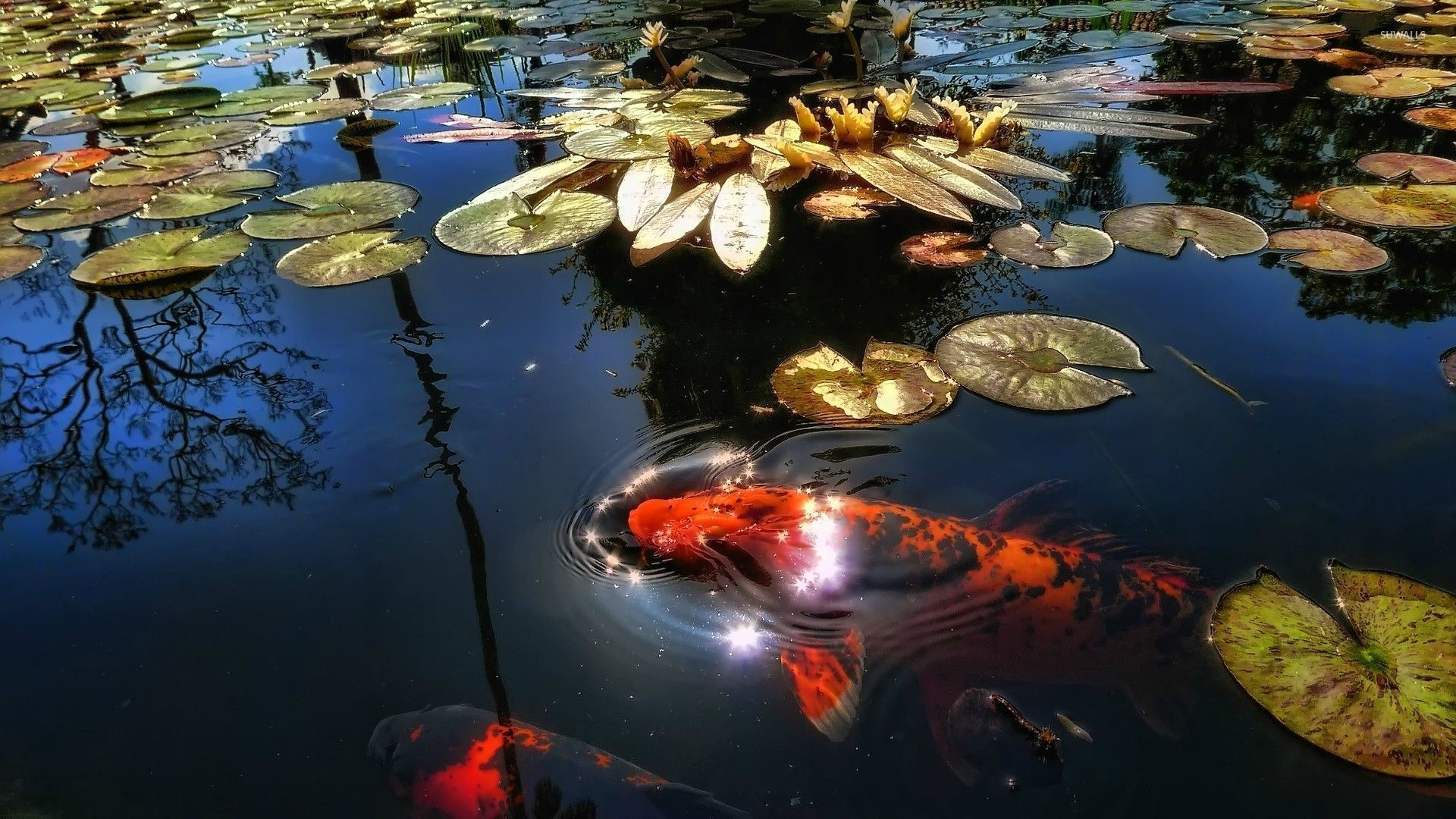 photos of pond