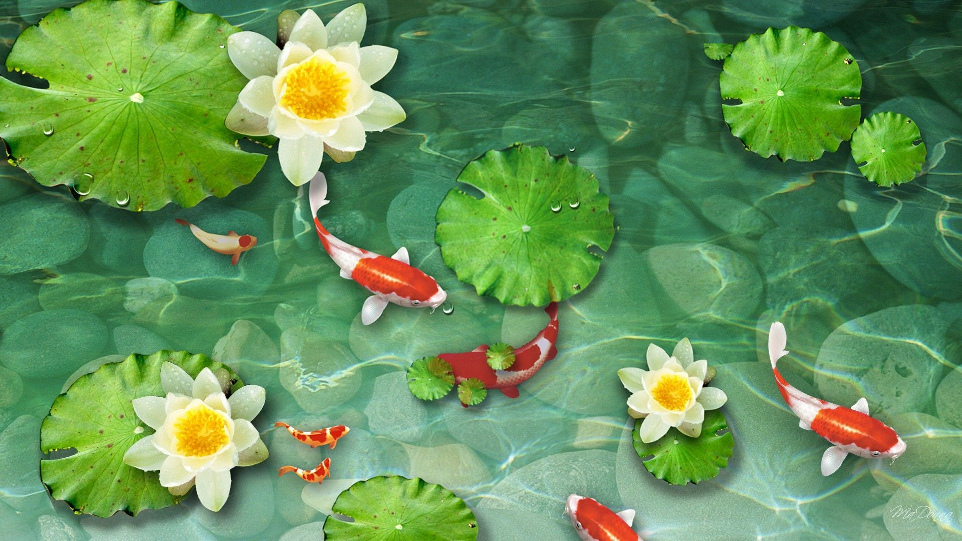 pictures of fish ponds