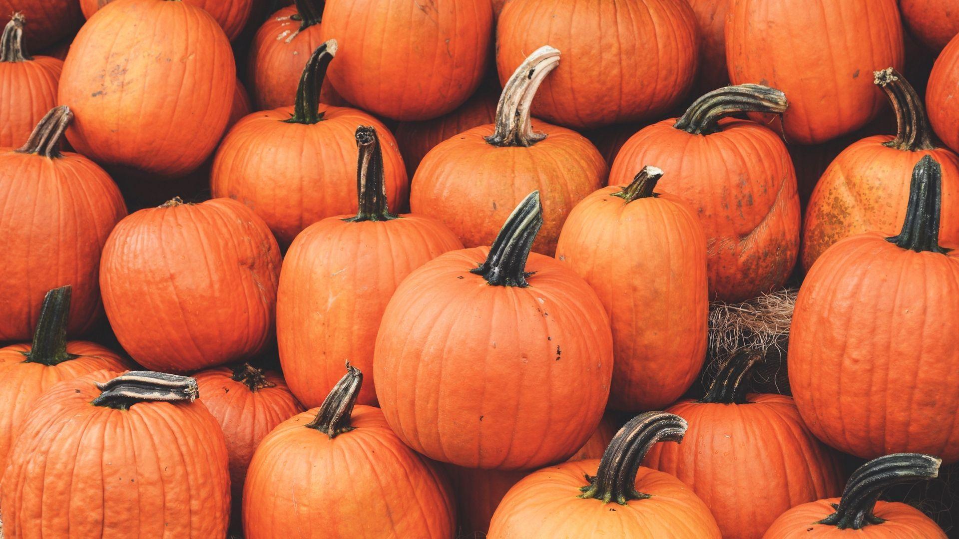 pumpkin spice wallpaper