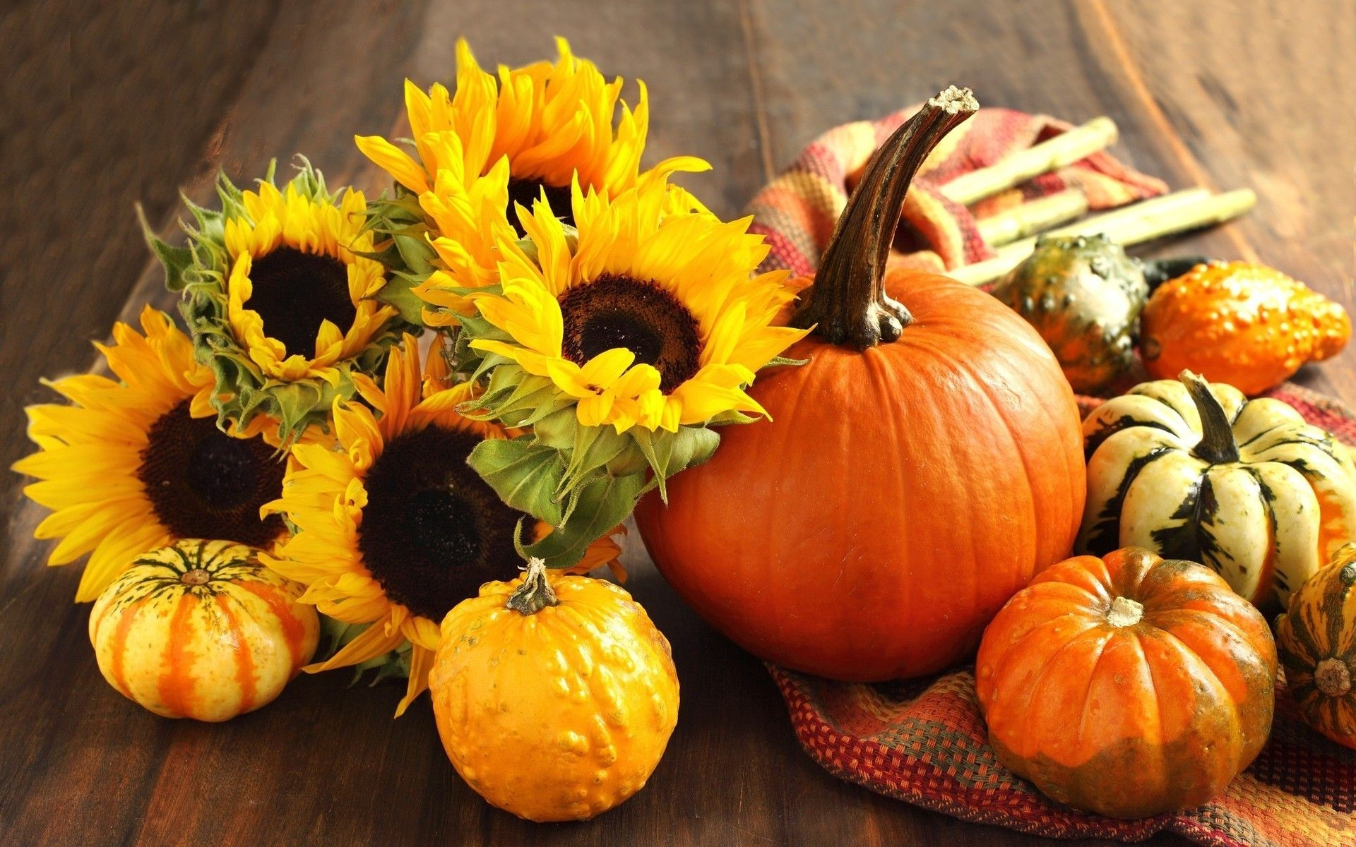 fall backgrounds with pumpkins