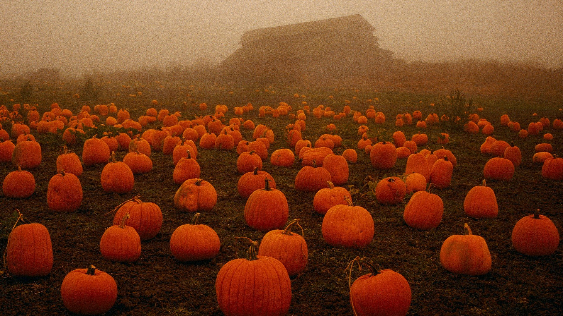 fall wallpaper pumpkins