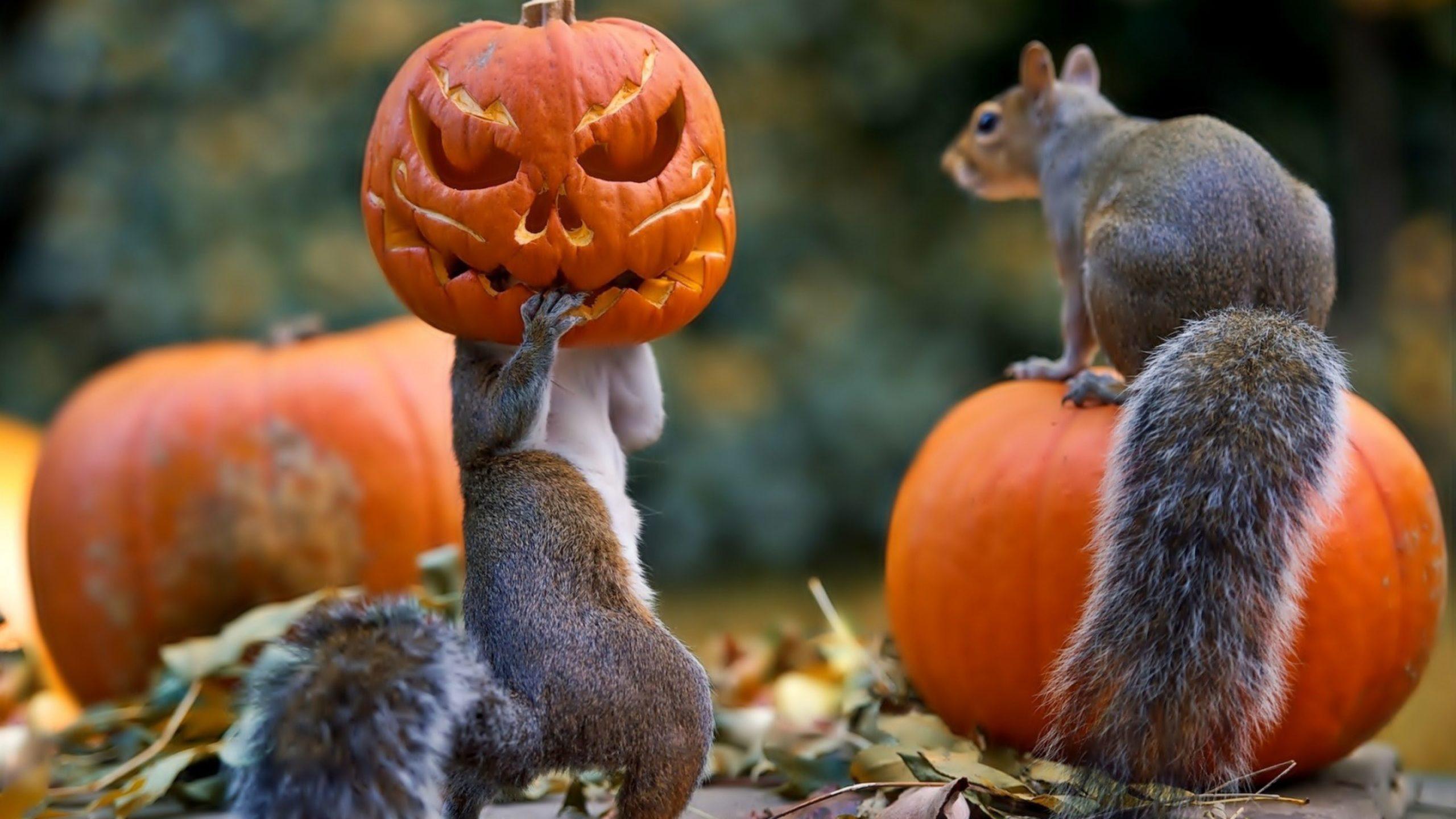 fall pumpkin desktop backgrounds