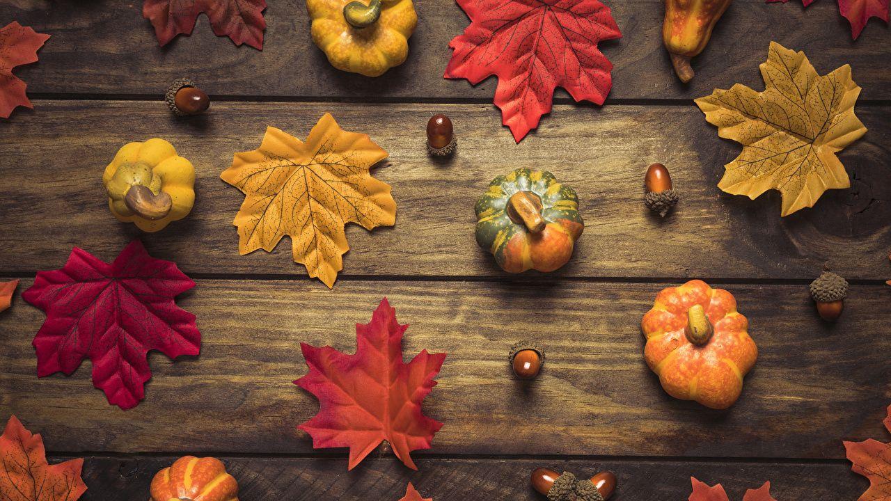 pumpkin desktop backgrounds hd wallpapers