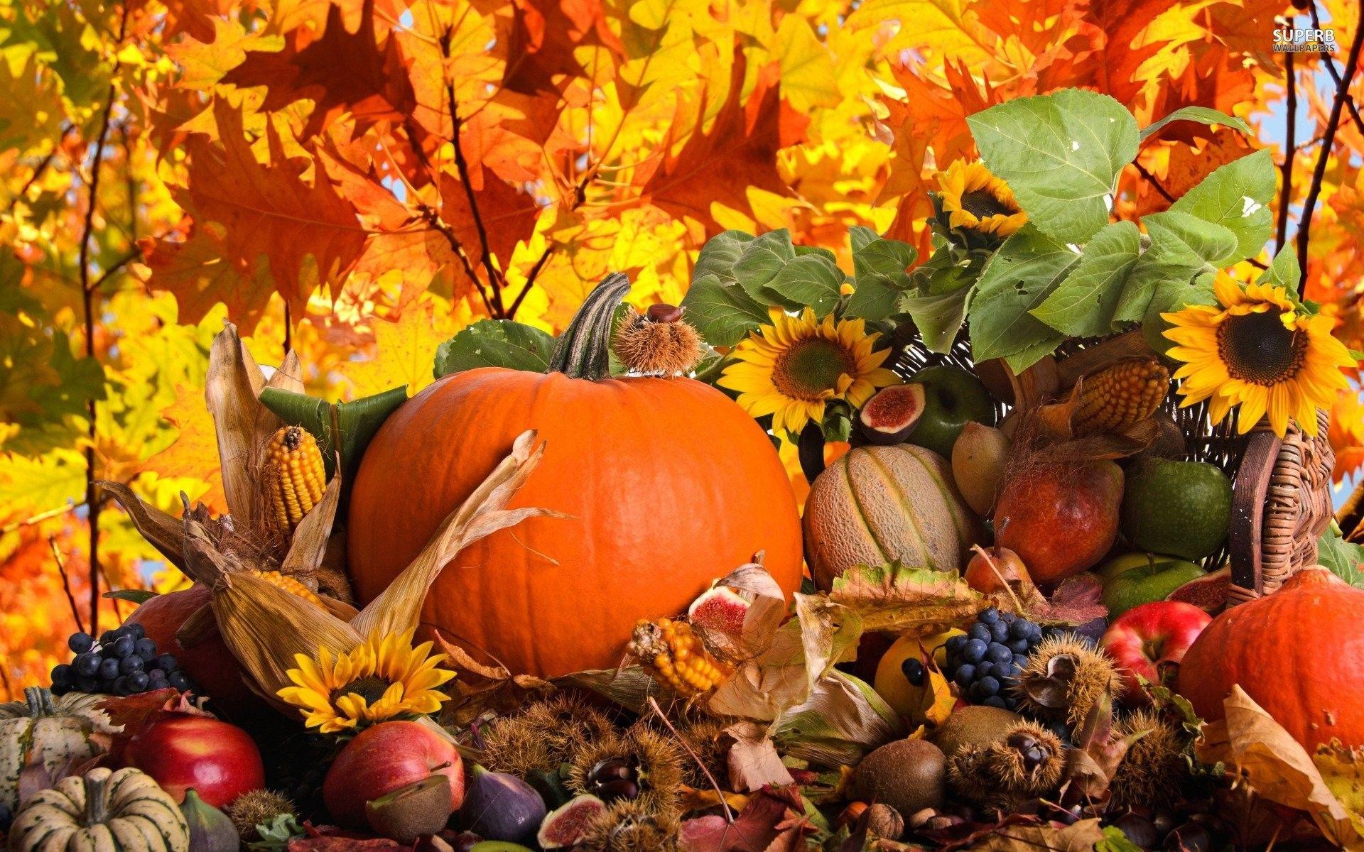 fall pumpkin wallpaper backgrounds