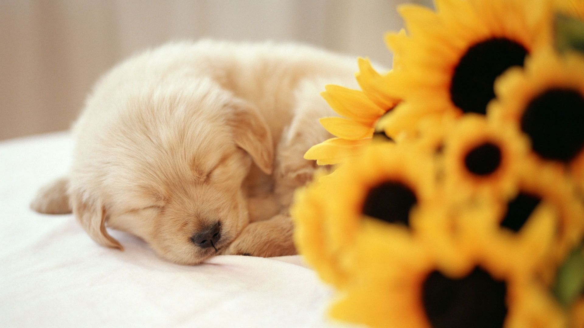 puppies wallpapers free