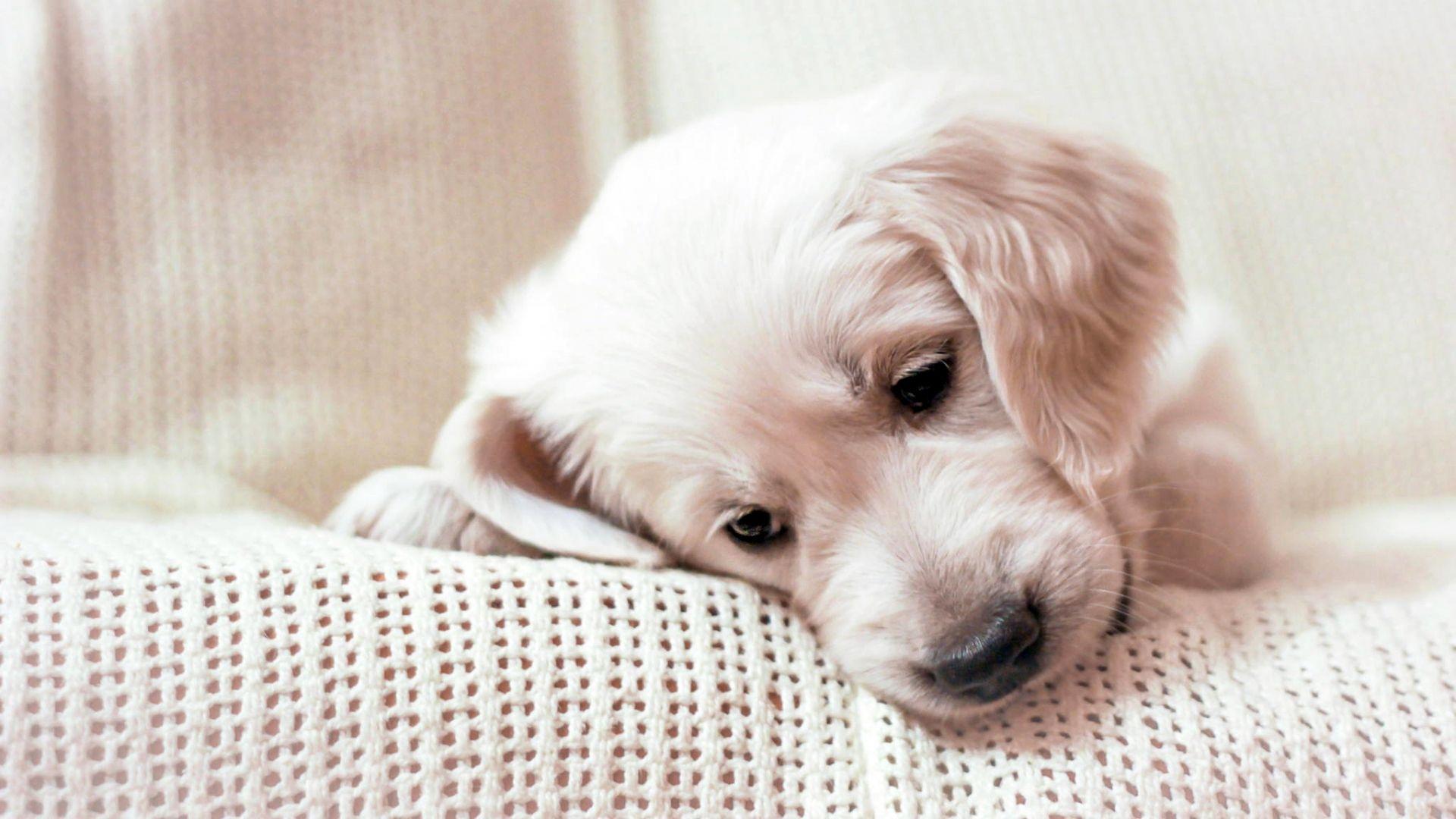 wallpaper of puppy