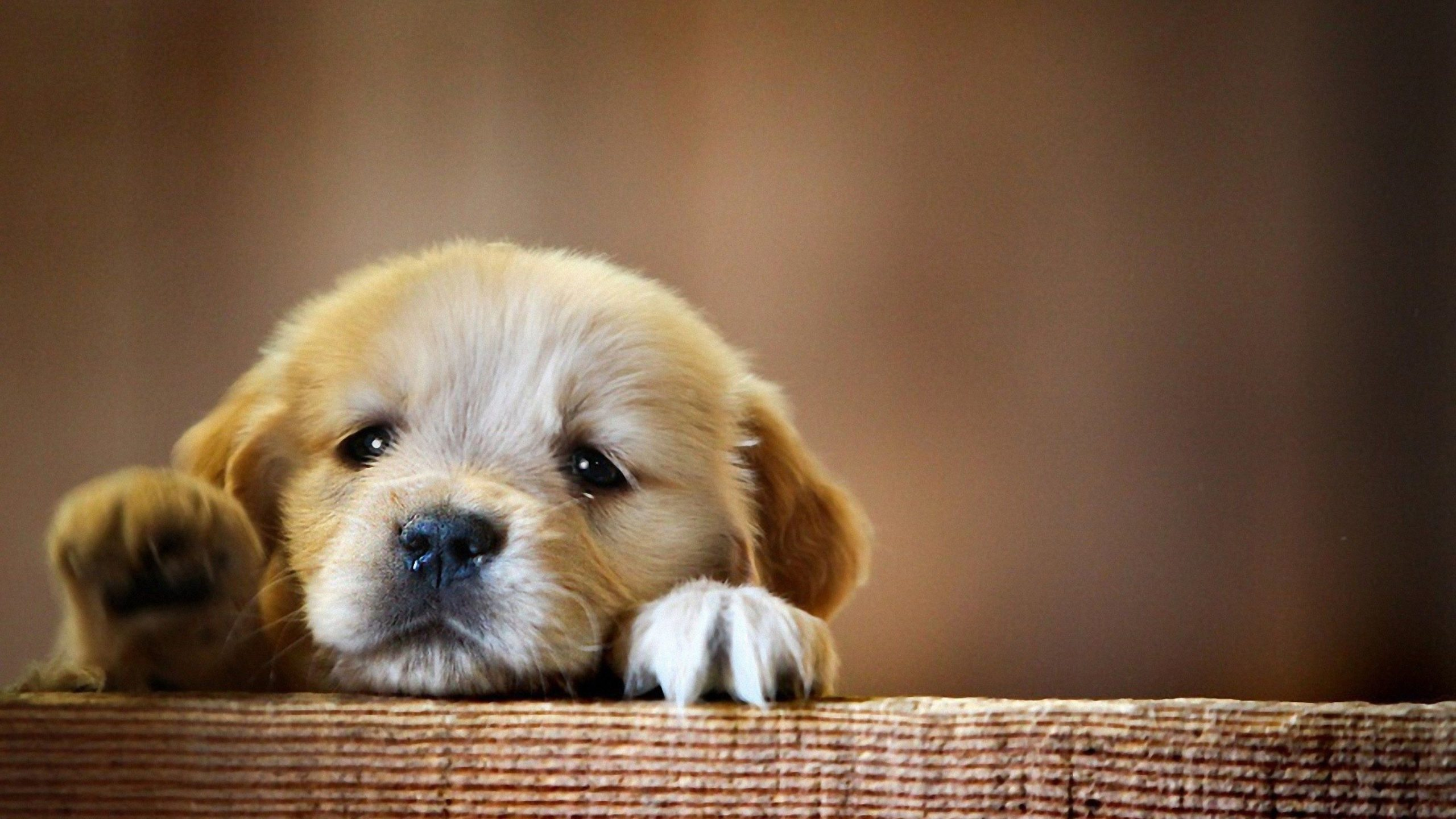 puppies wallpaper free