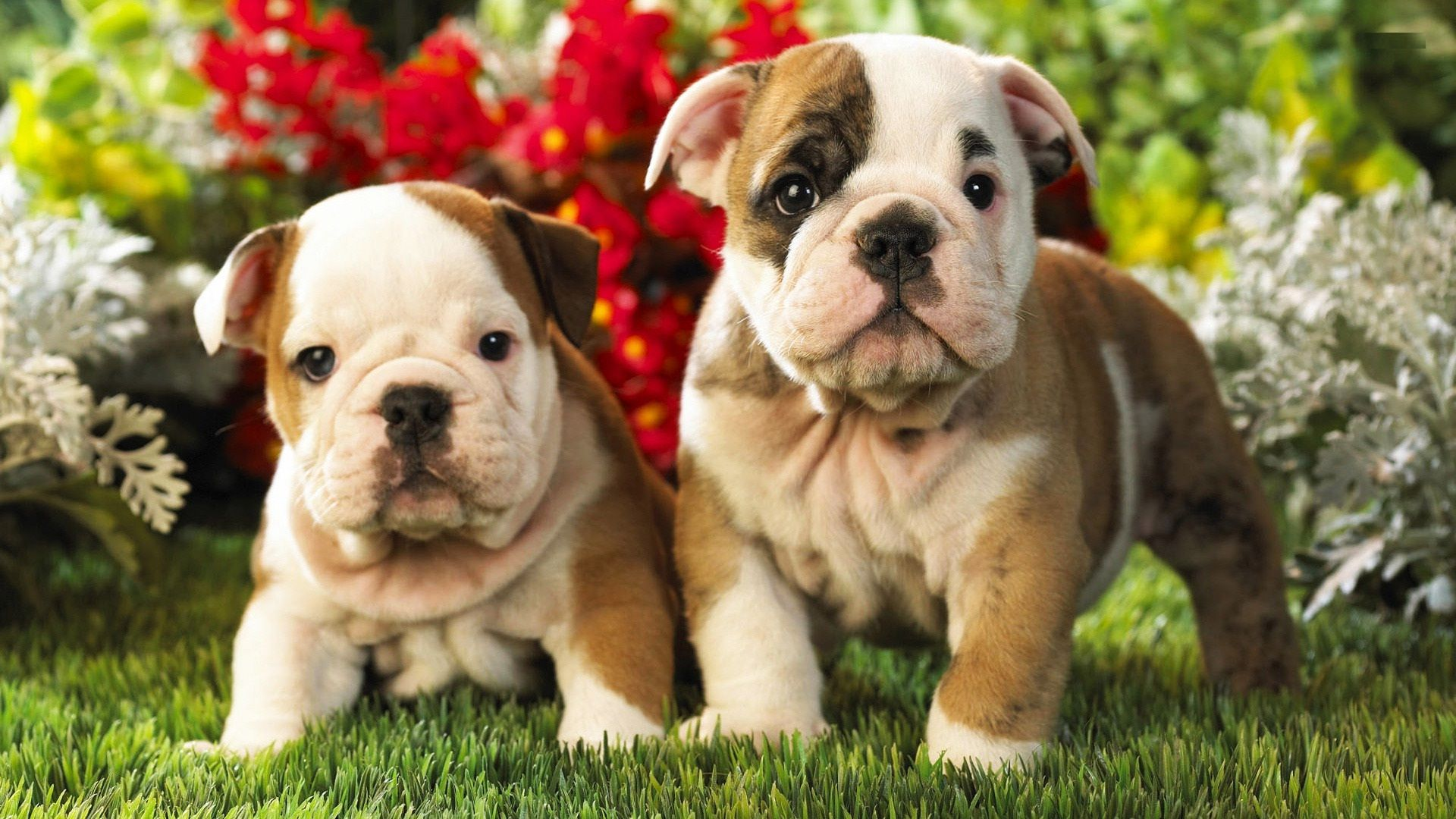 cutest puppy backgrounds