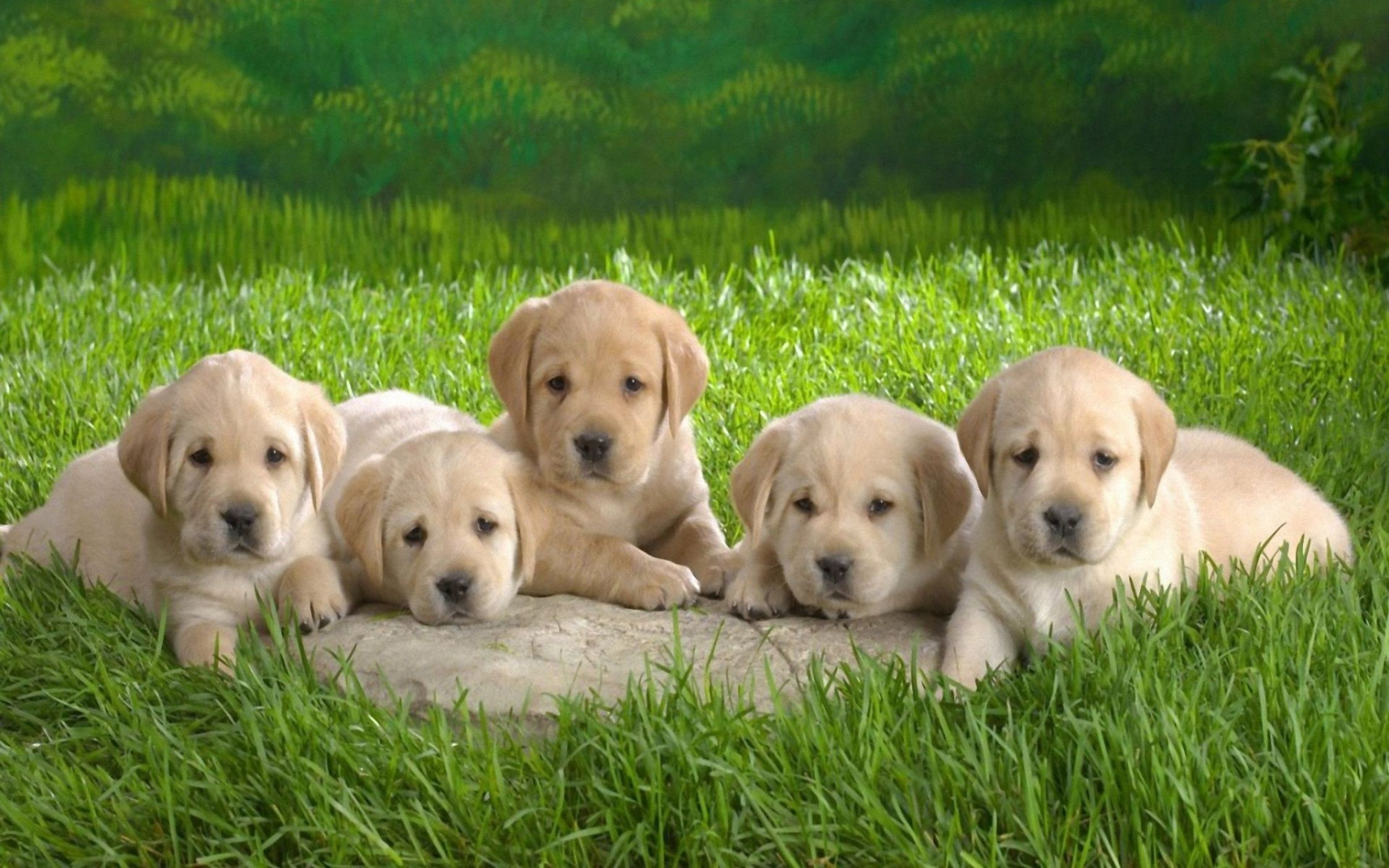 cute dogs wallpapers hd