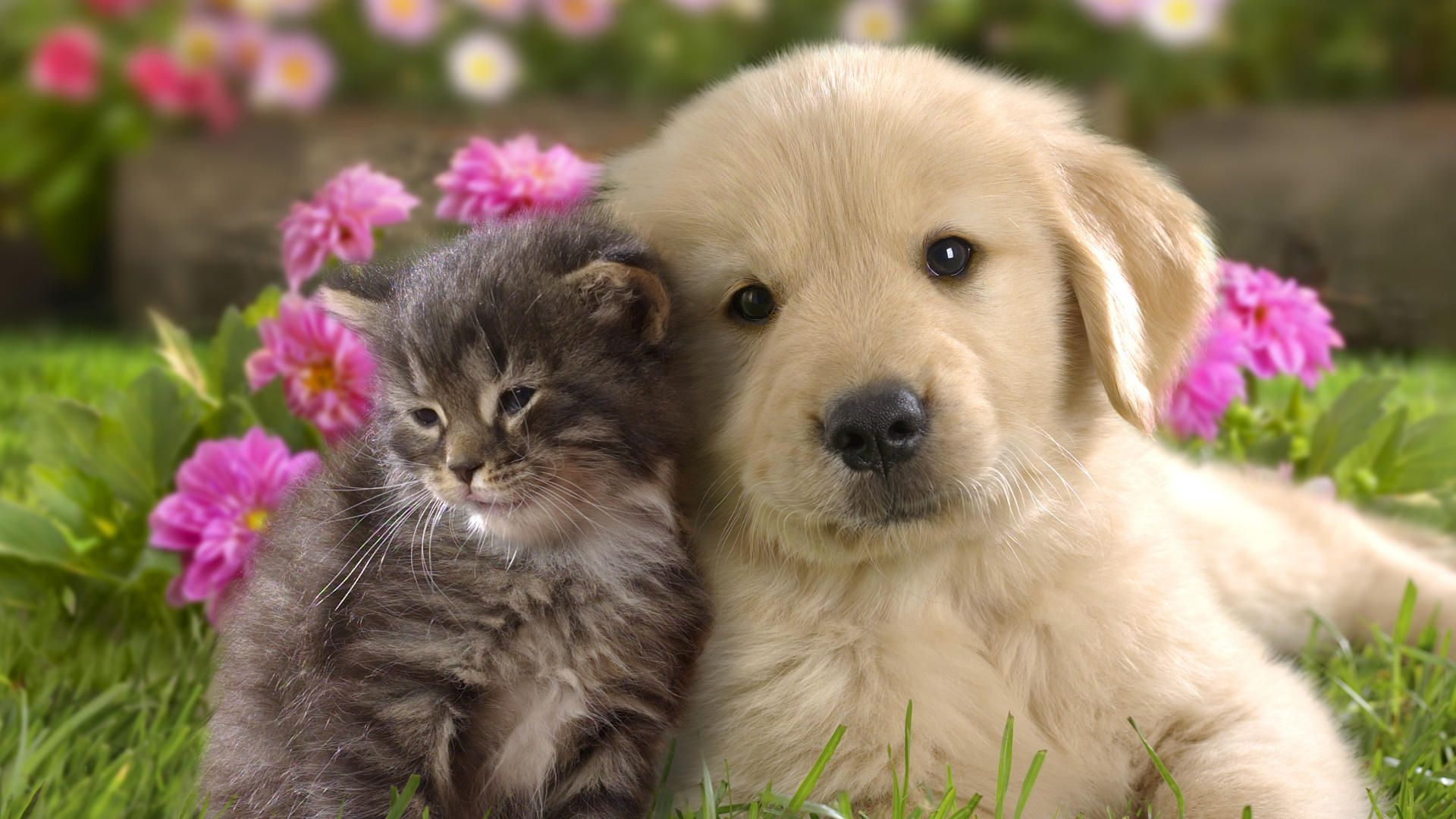 cute puppies wallpapers 4k