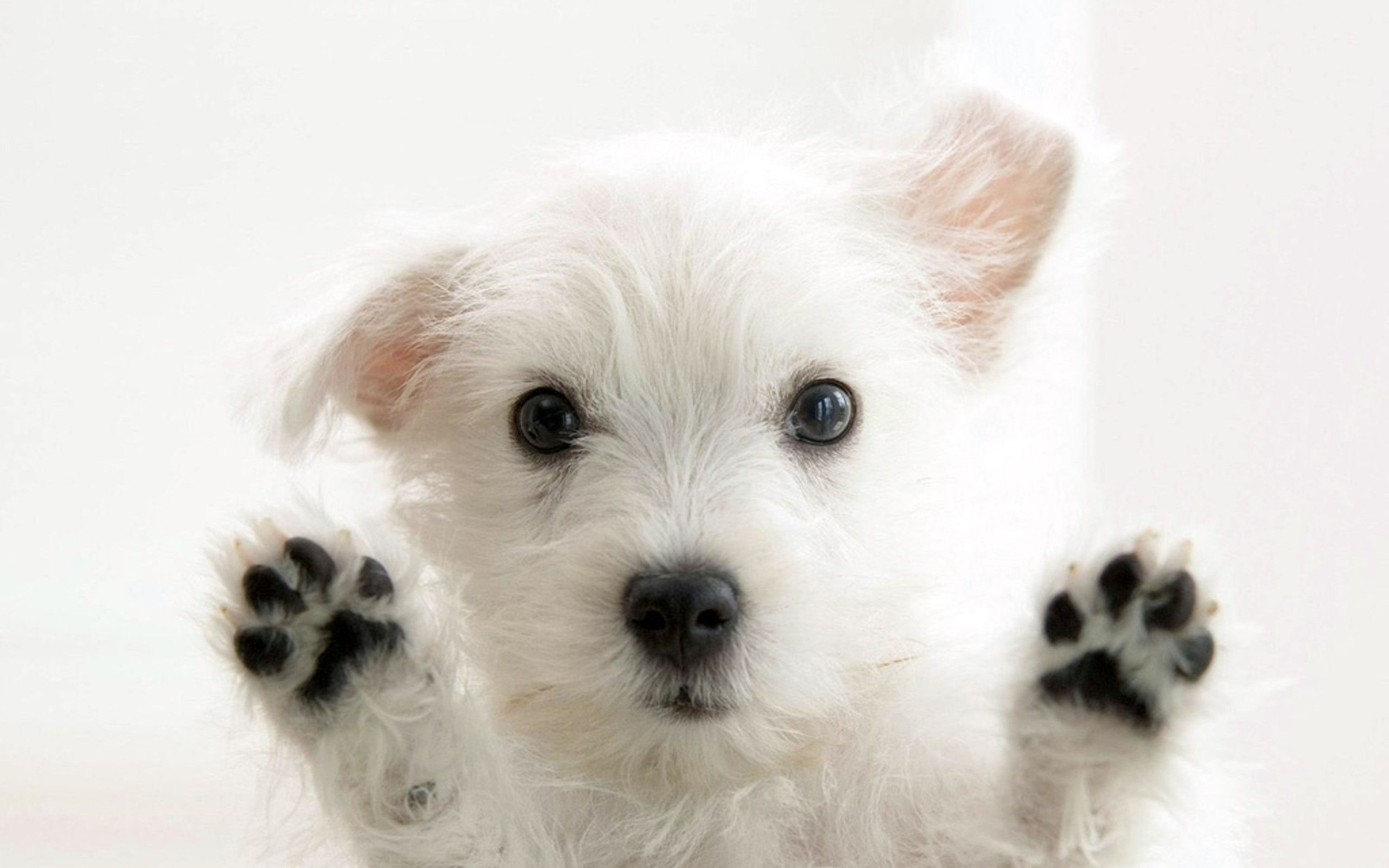 puppies screensavers wallpapers hd