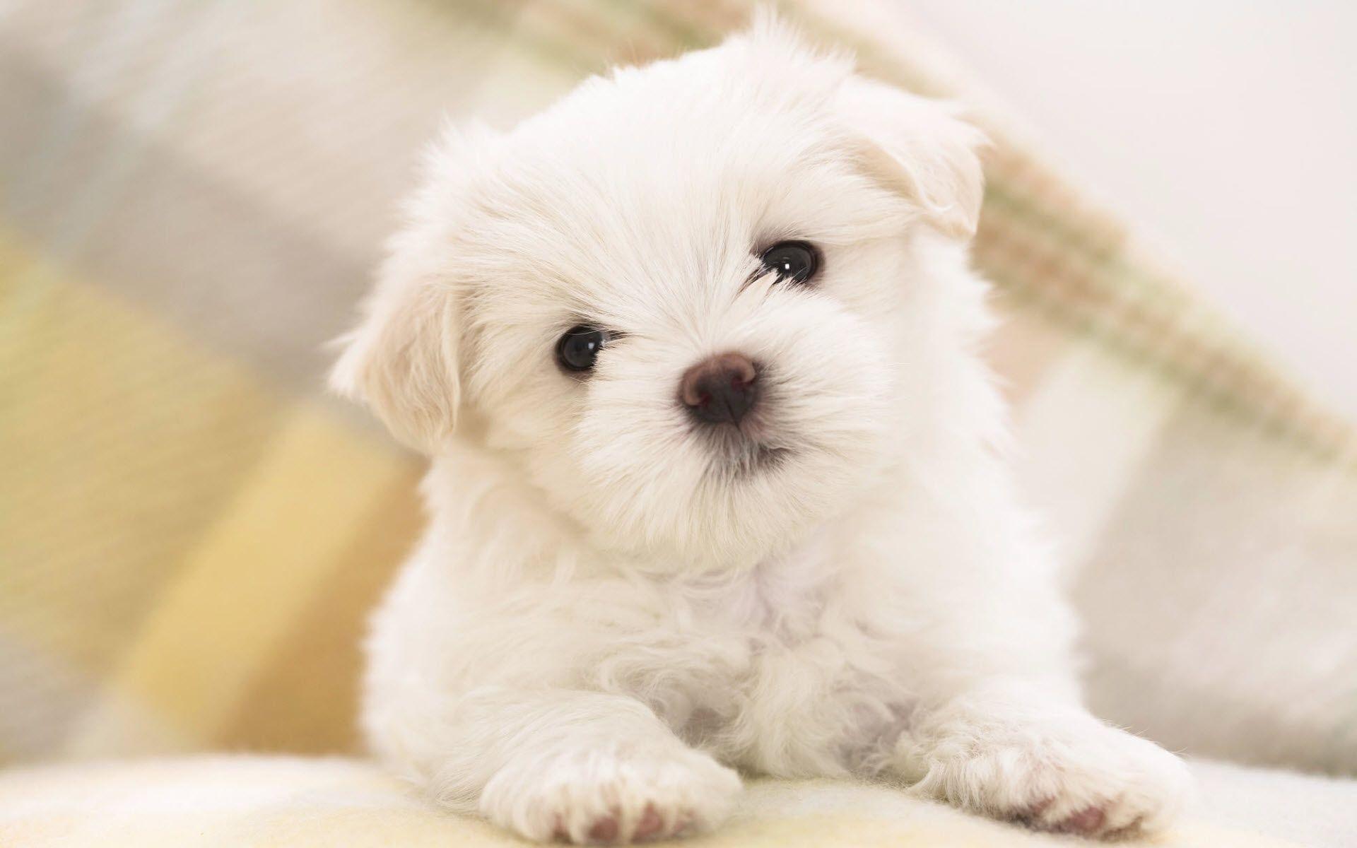 cute puppy screensavers