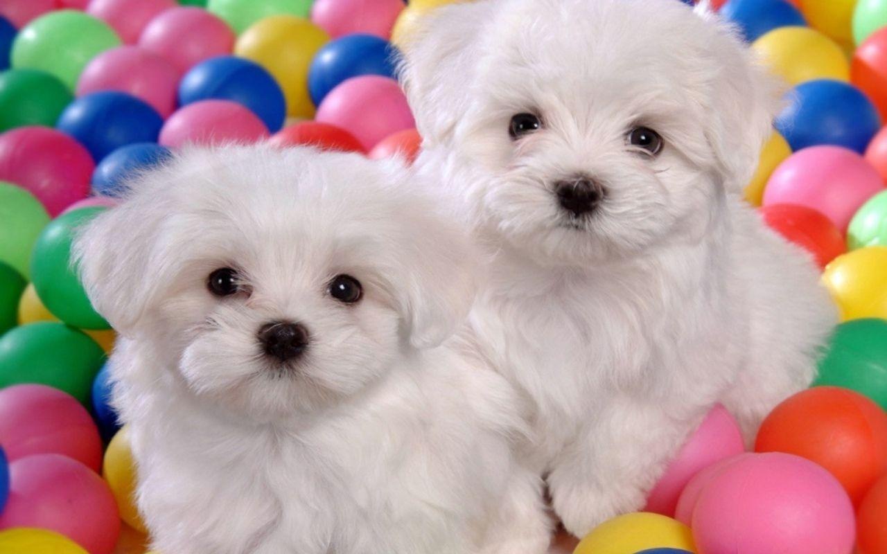 cute dog wallpaper free download
