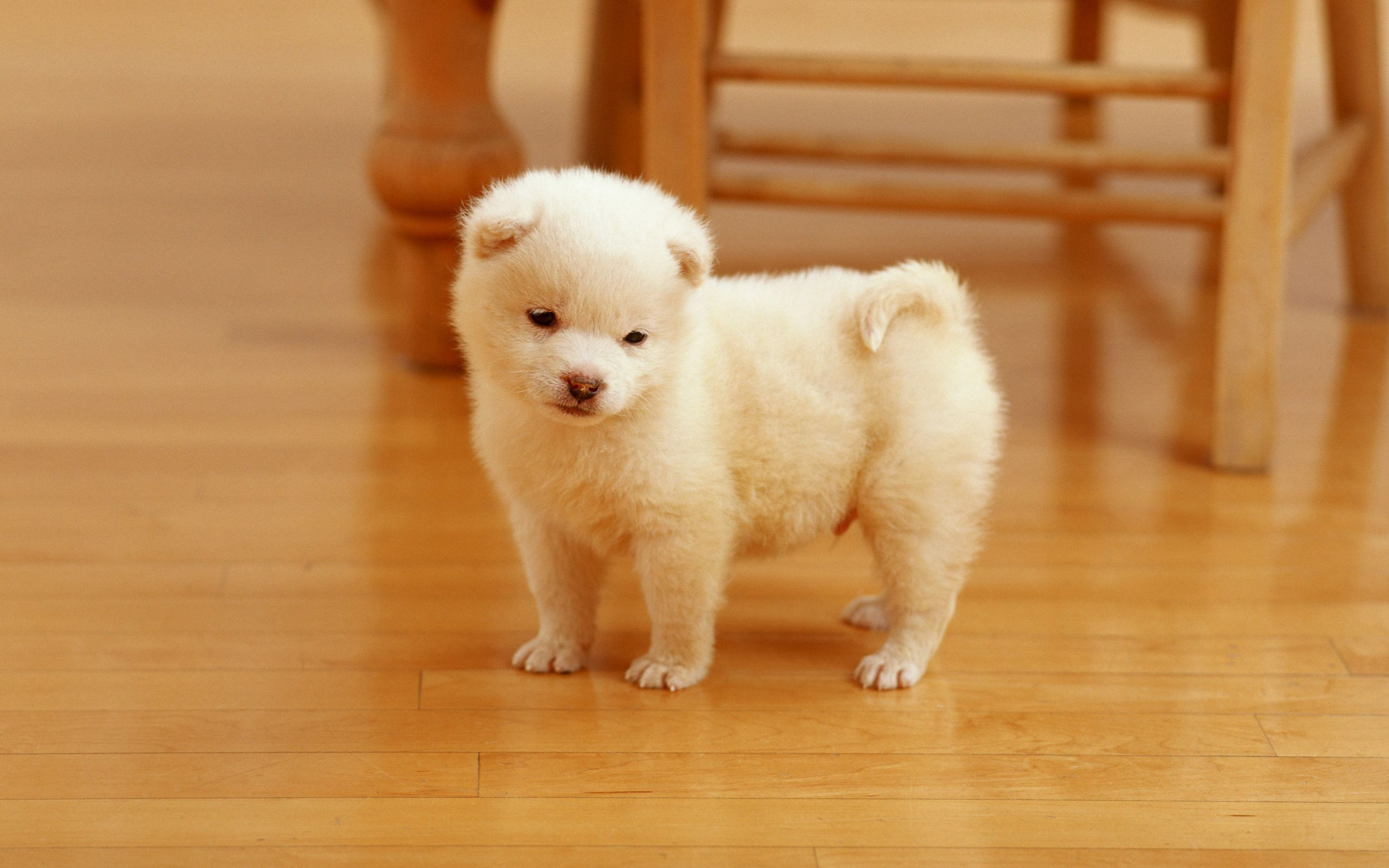 puppy wallpapers free download