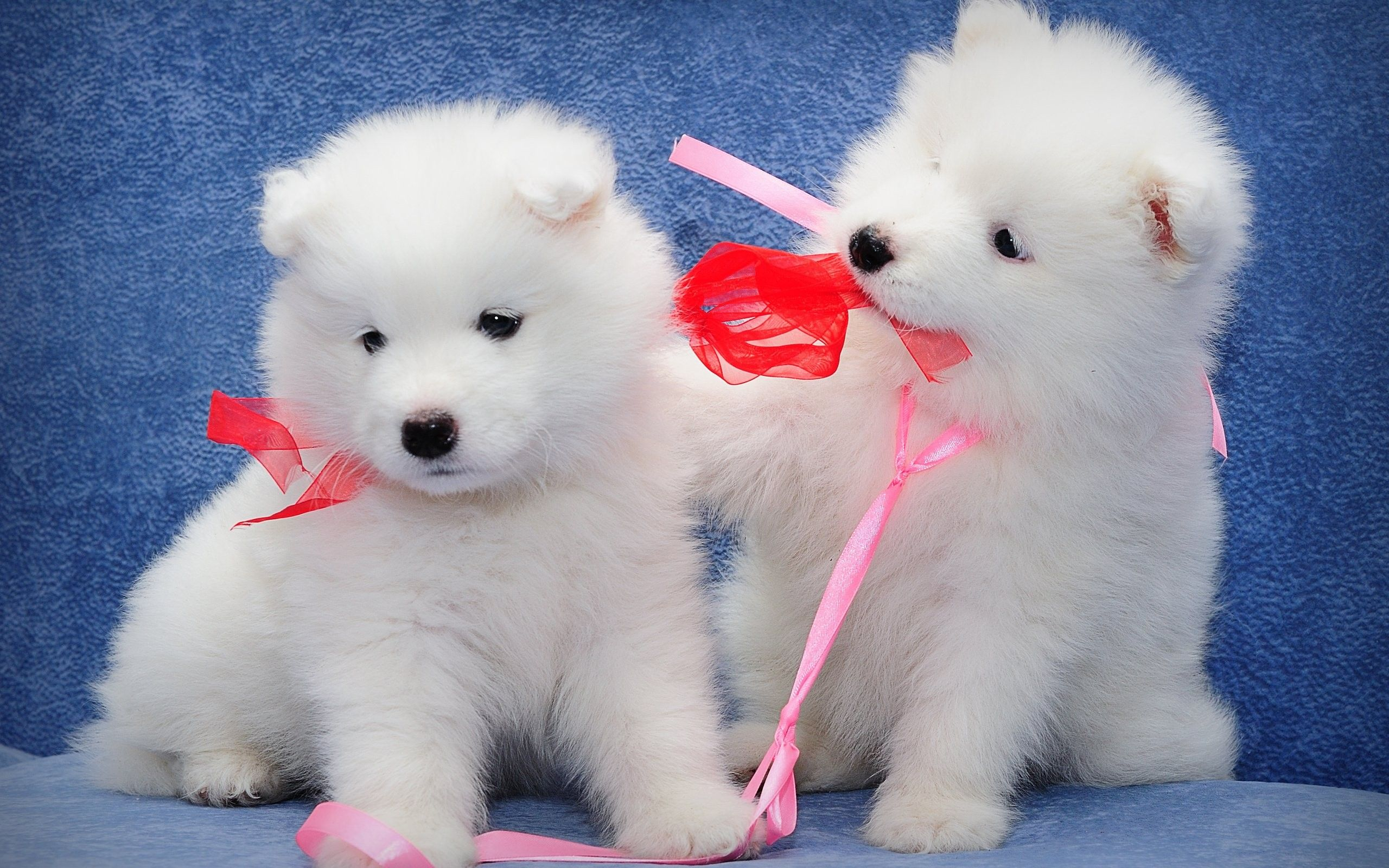 Puppy Wallpapers Trumpwallpapers