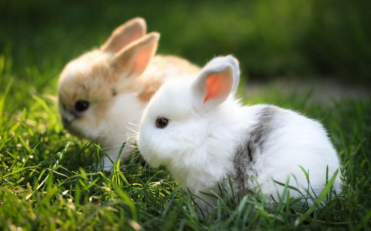 photos of bunnies