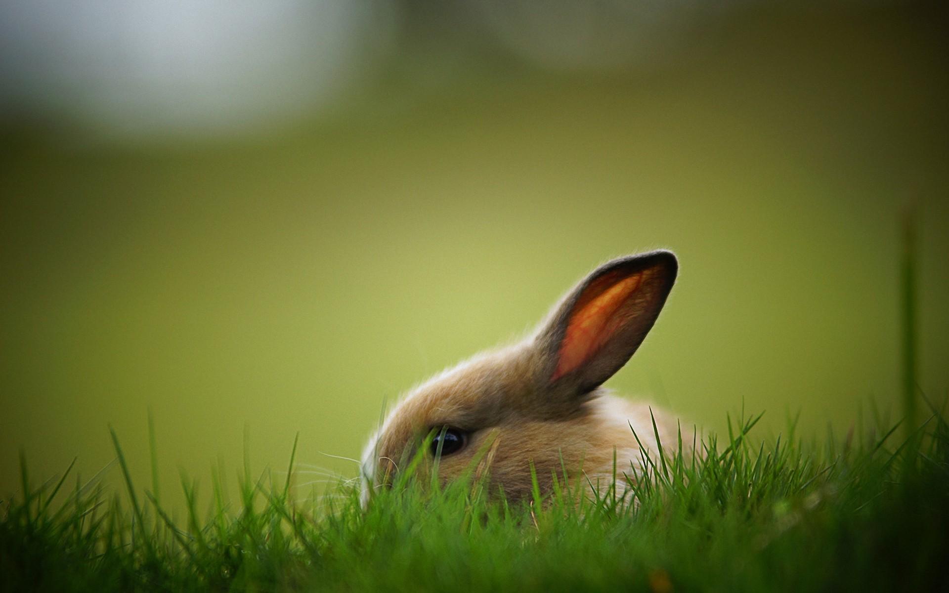 pics of rabbit