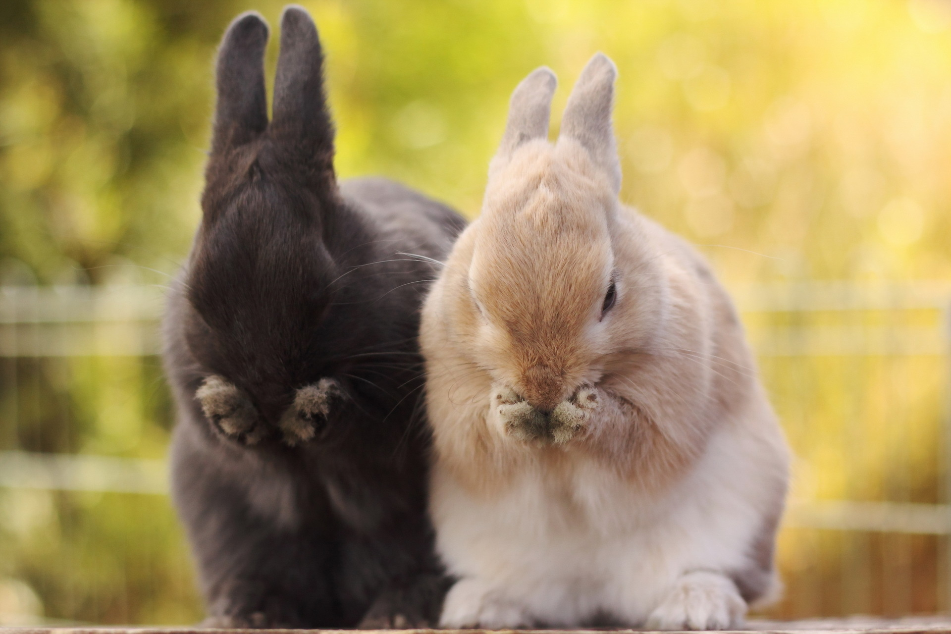 pictures of rabbits