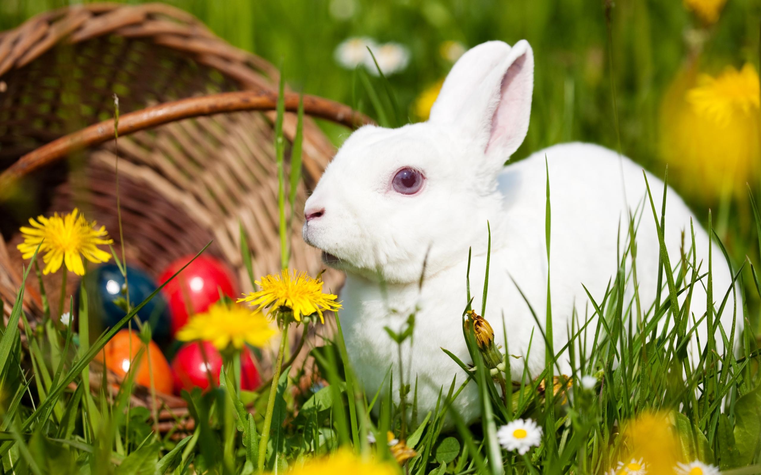 photos of rabbit