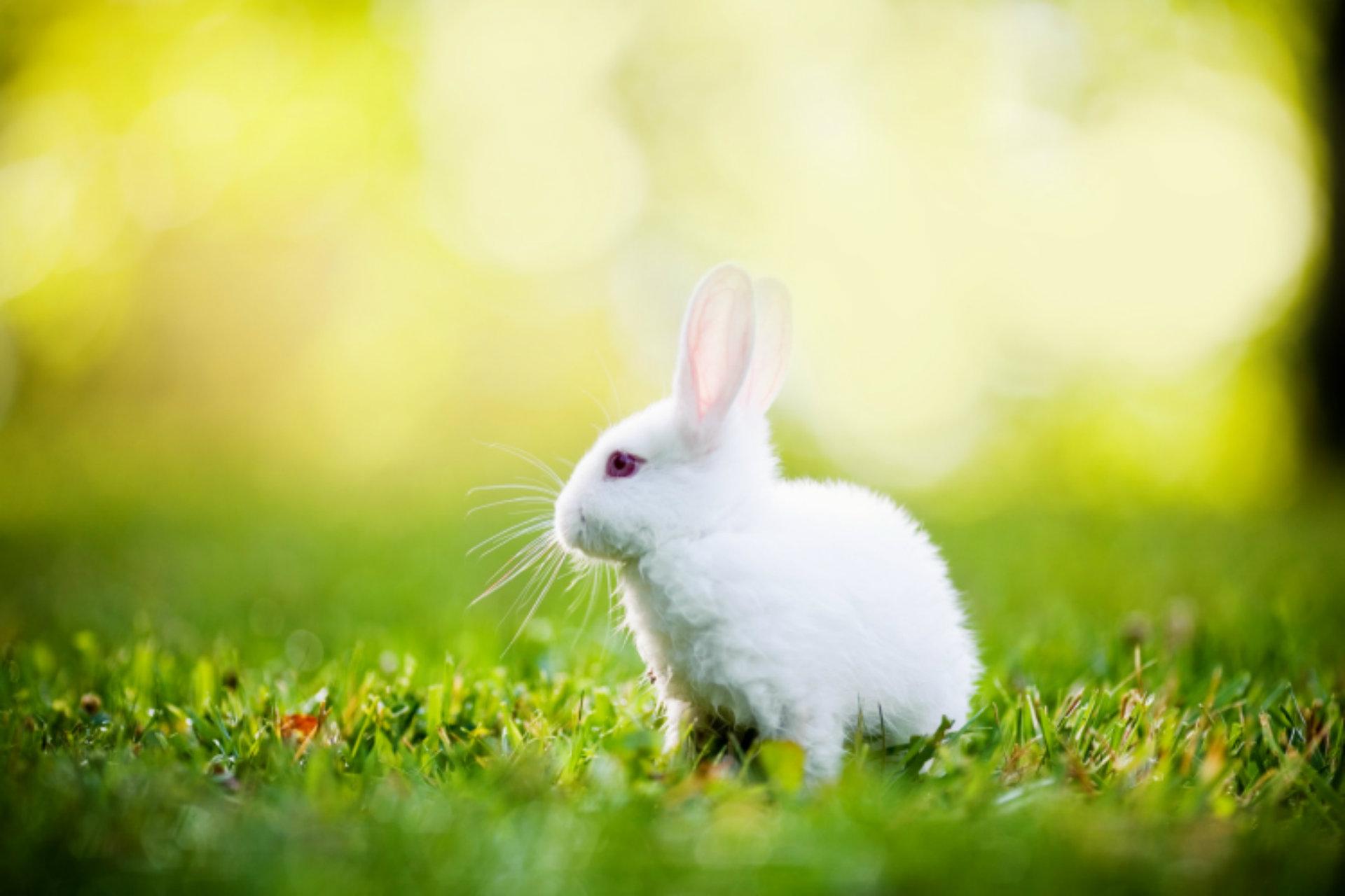 photos of bunny