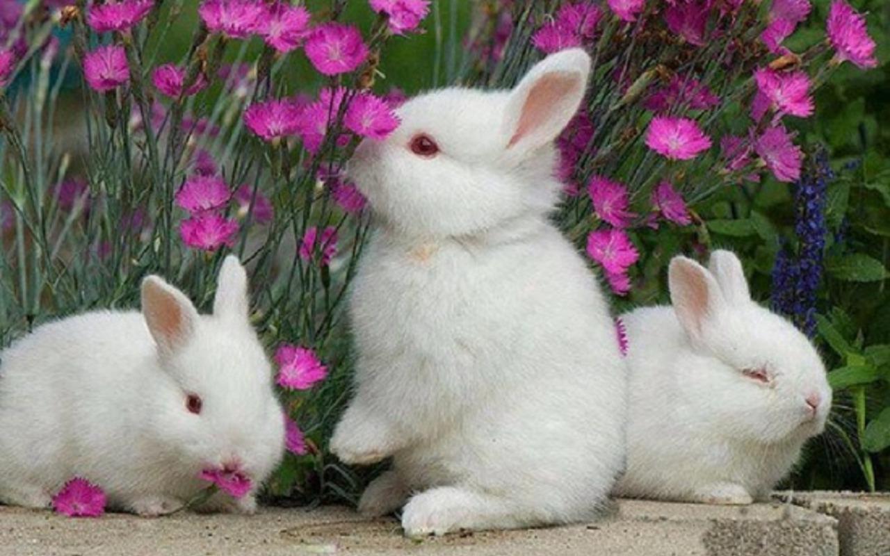 rabbit pictures